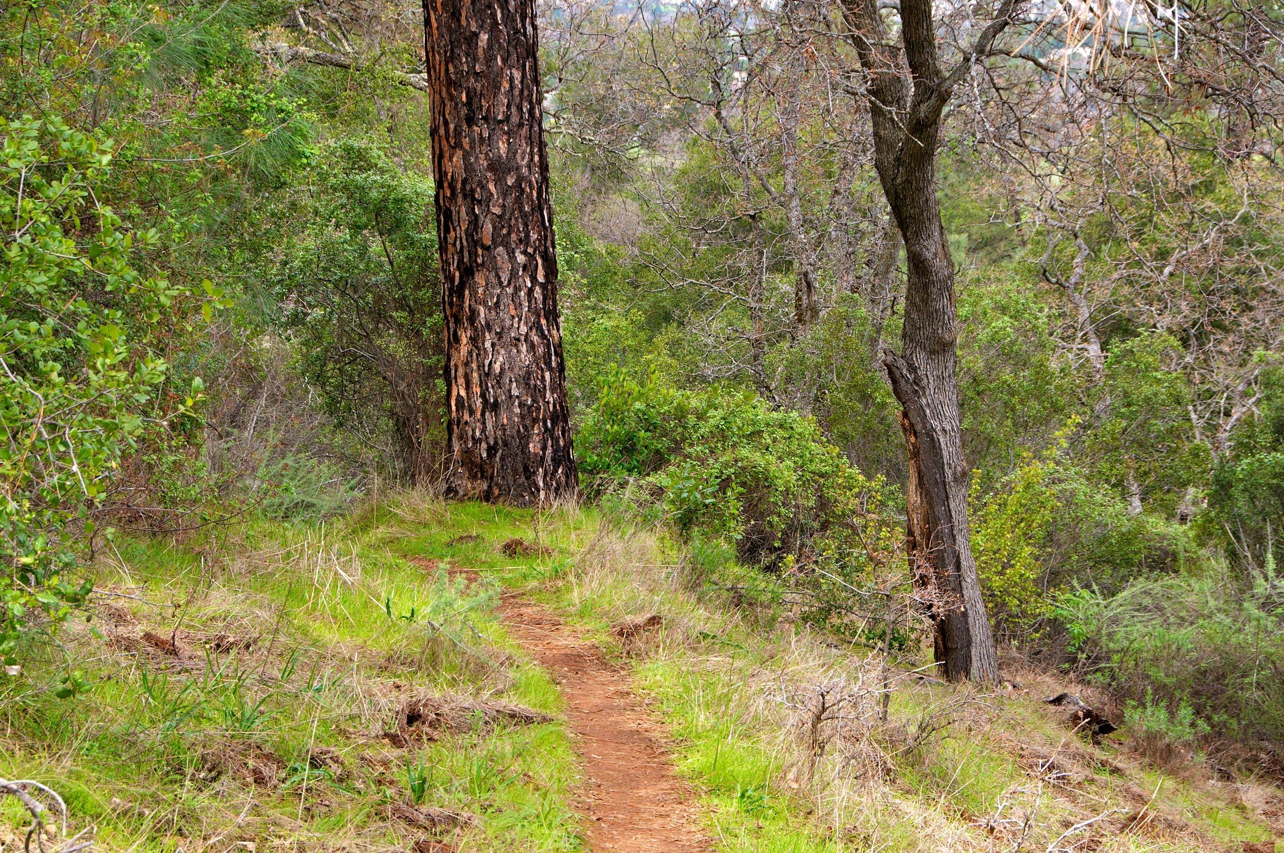 Mt. Diablo Hike 2_12_2011 - 2011-02-21 at 12-54-18.jpg