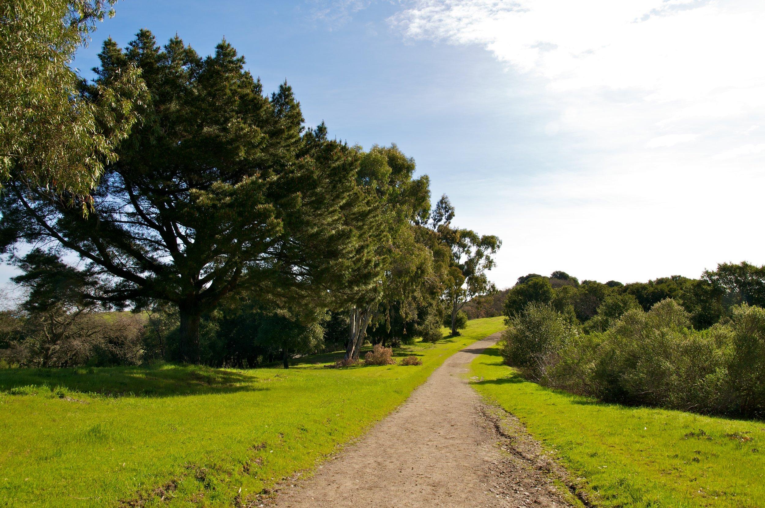 Rim trail 3_5_11 (7).jpg