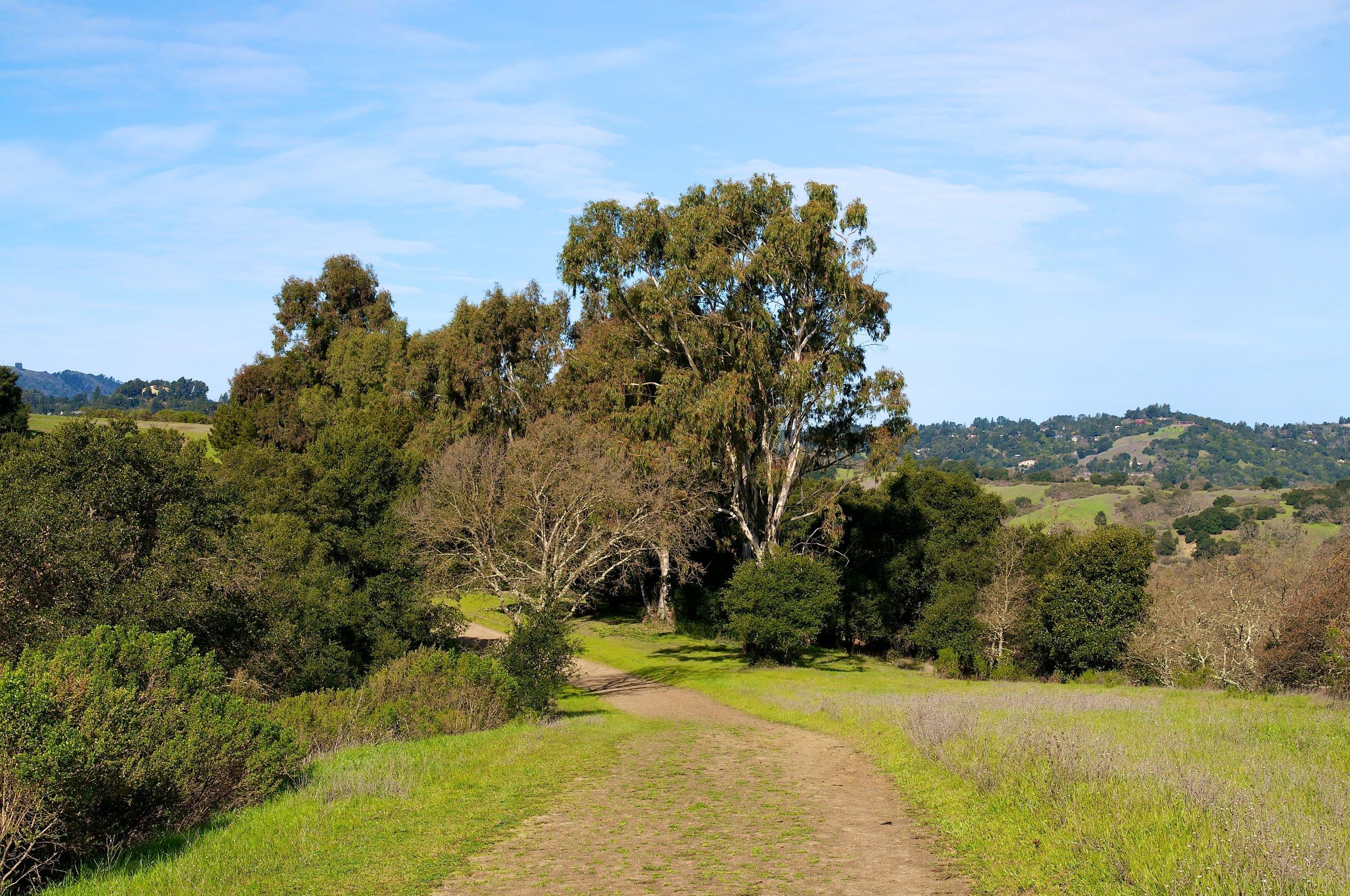 Rim trail 3_5_11 (9).jpg