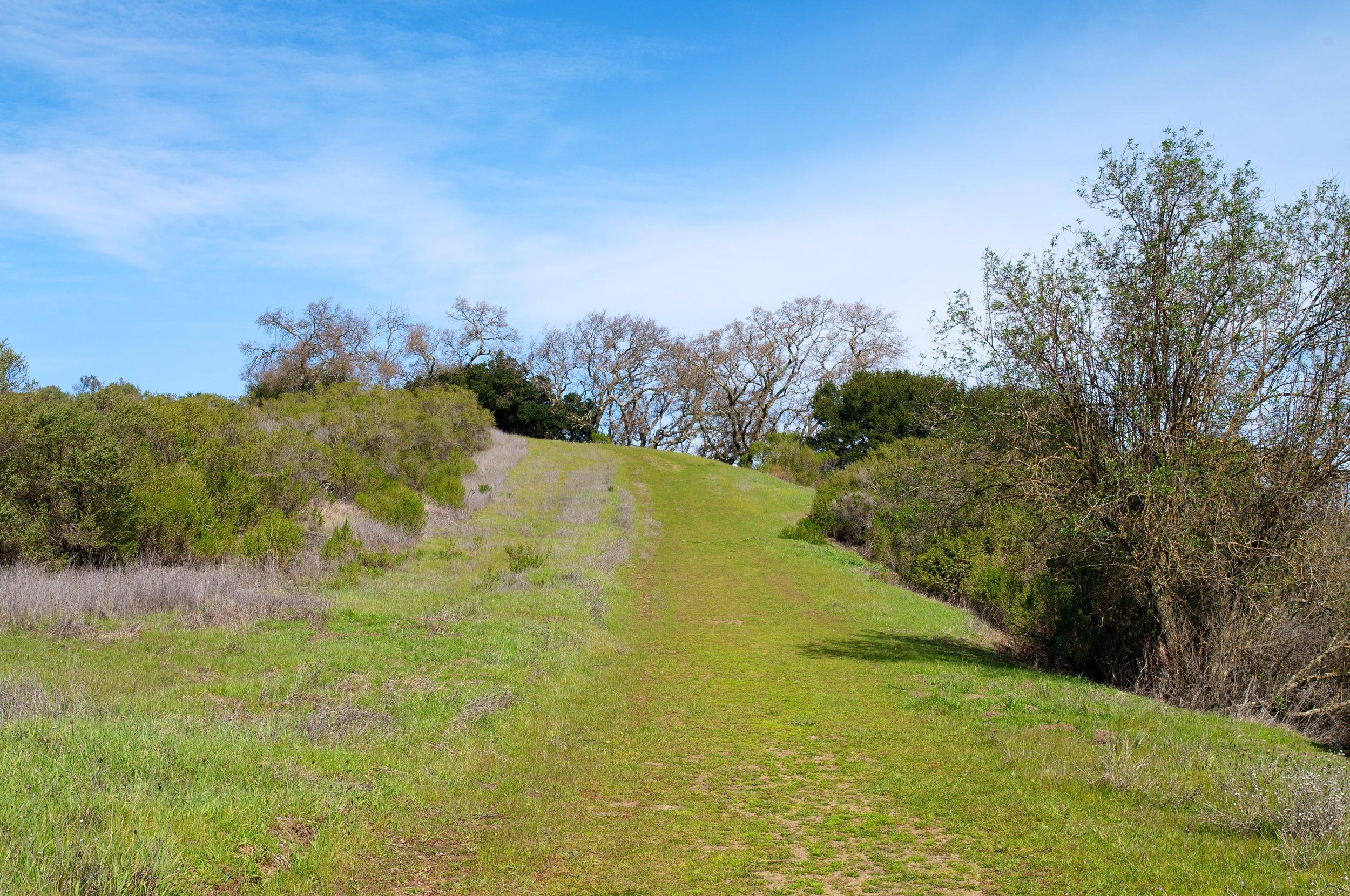 Rim trail 3_5_11 (40).jpg