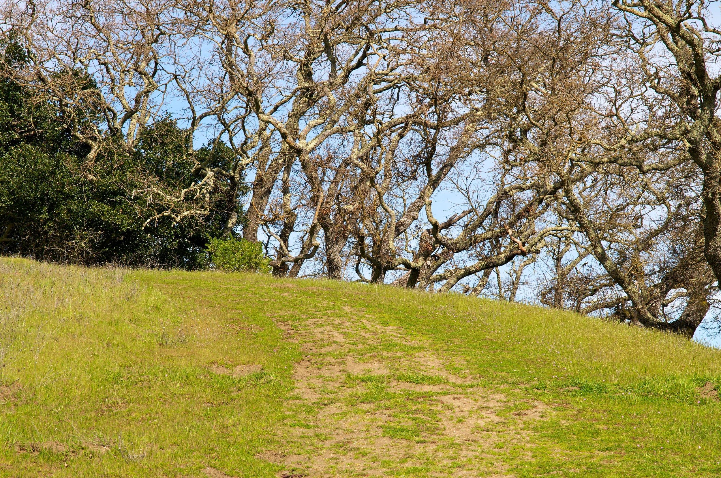 Rim trail 3_5_11 (44).jpg