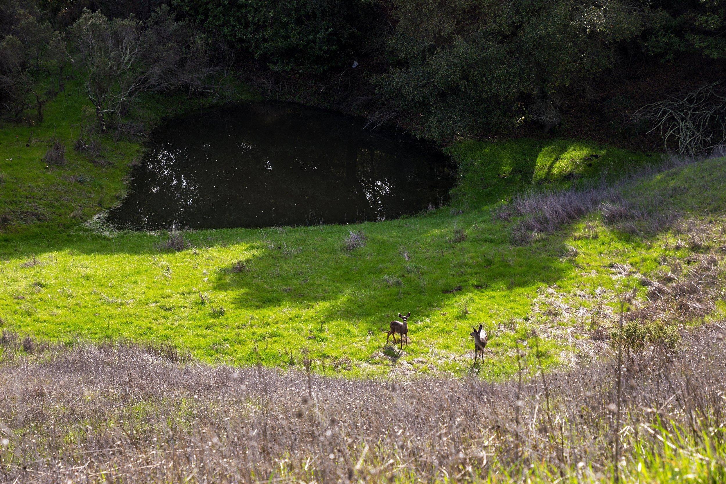 Oursan Trail-32.jpg