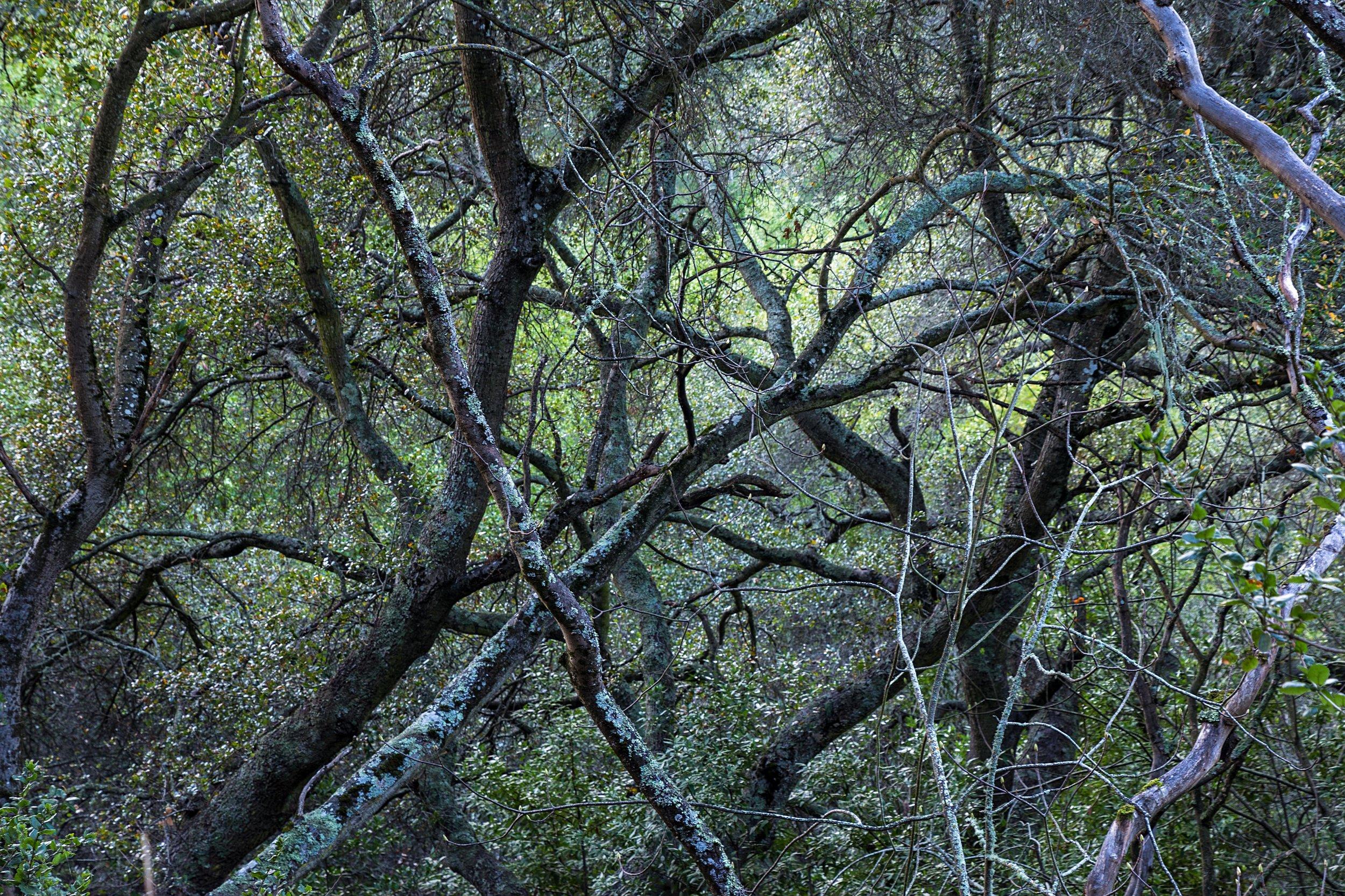 Oursan Trail-90.jpg