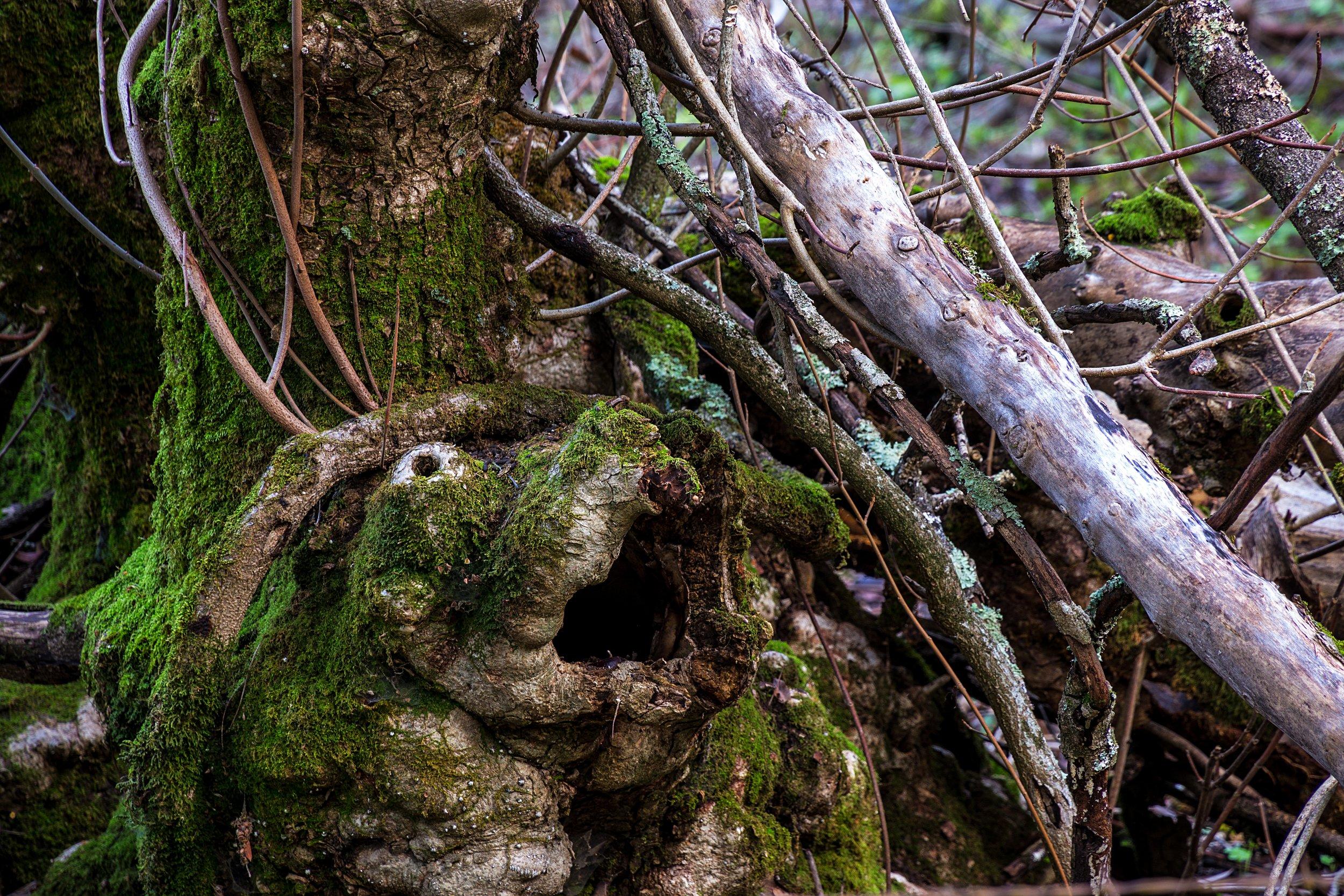 Oursan Trail-93.jpg