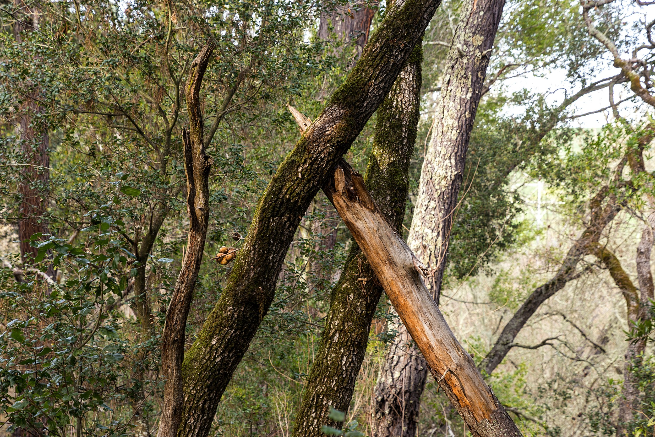 Old San Pablo Trail San Pablo Reservoir-21.jpg