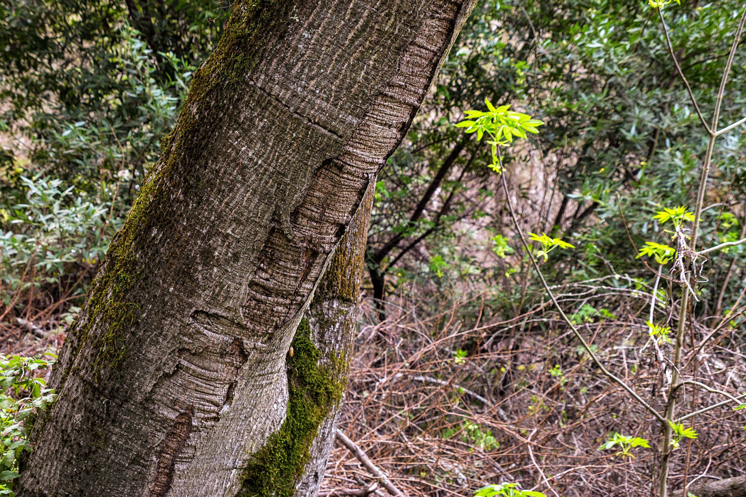 Old San Pablo Trail San Pablo Reservoir-63.jpg