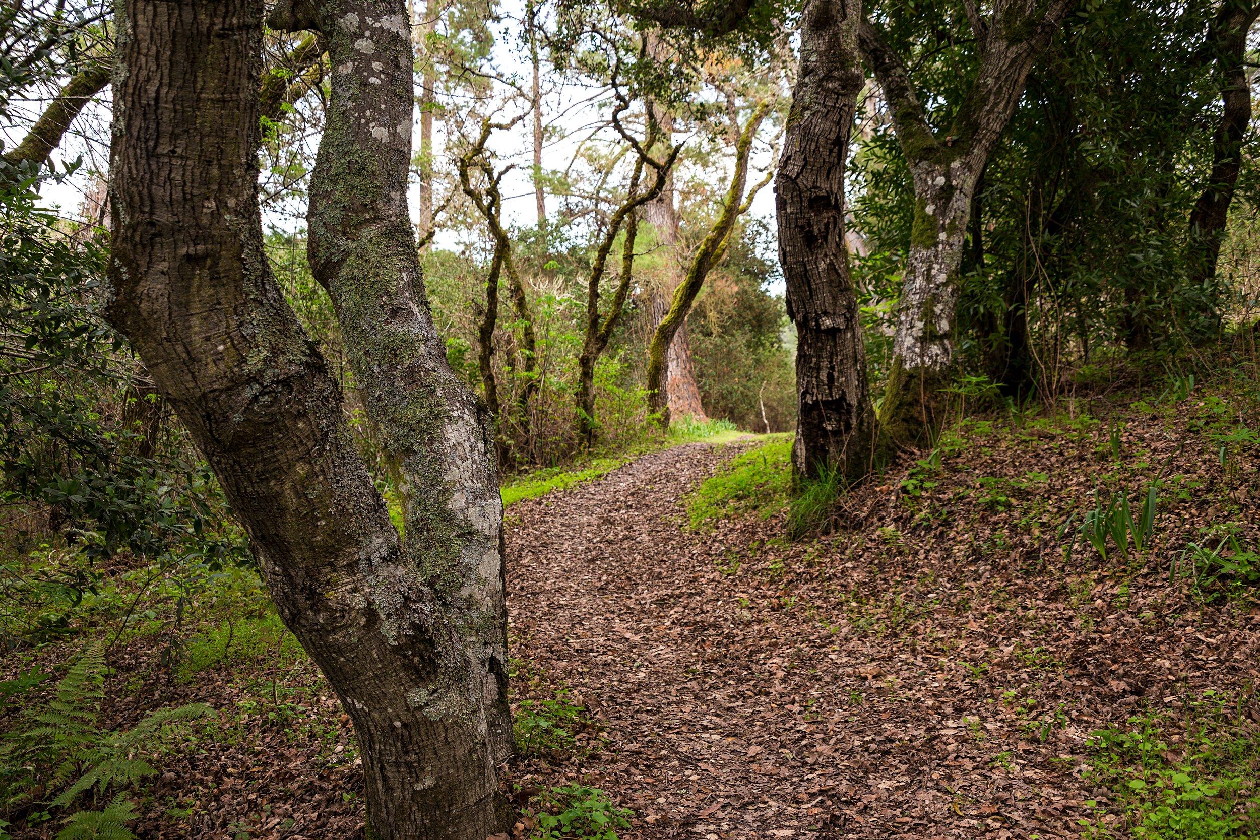 Old San Pablo Trail San Pablo Reservoir-80.jpg