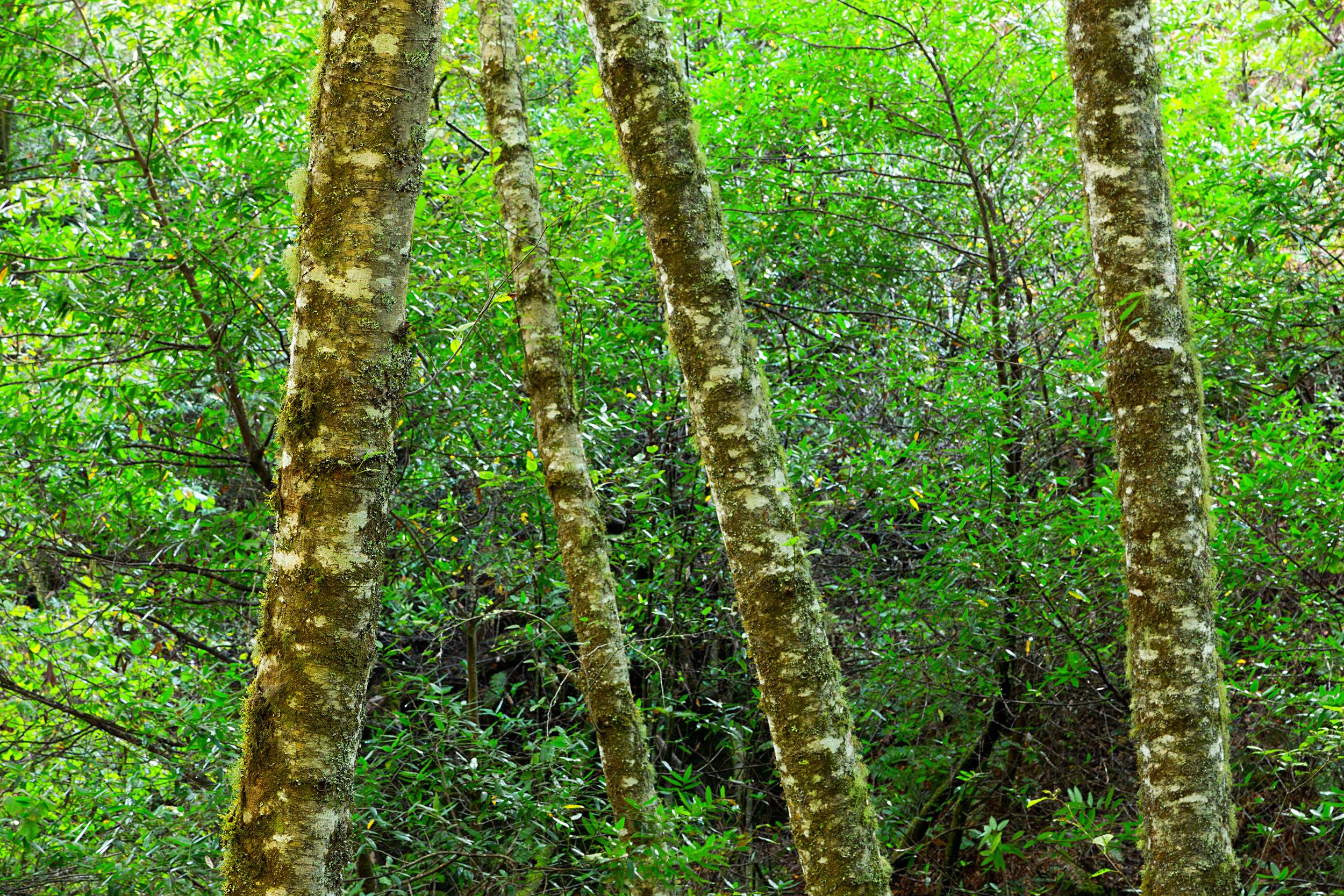 Pt Reyes Bear Creek Trail-2.jpg