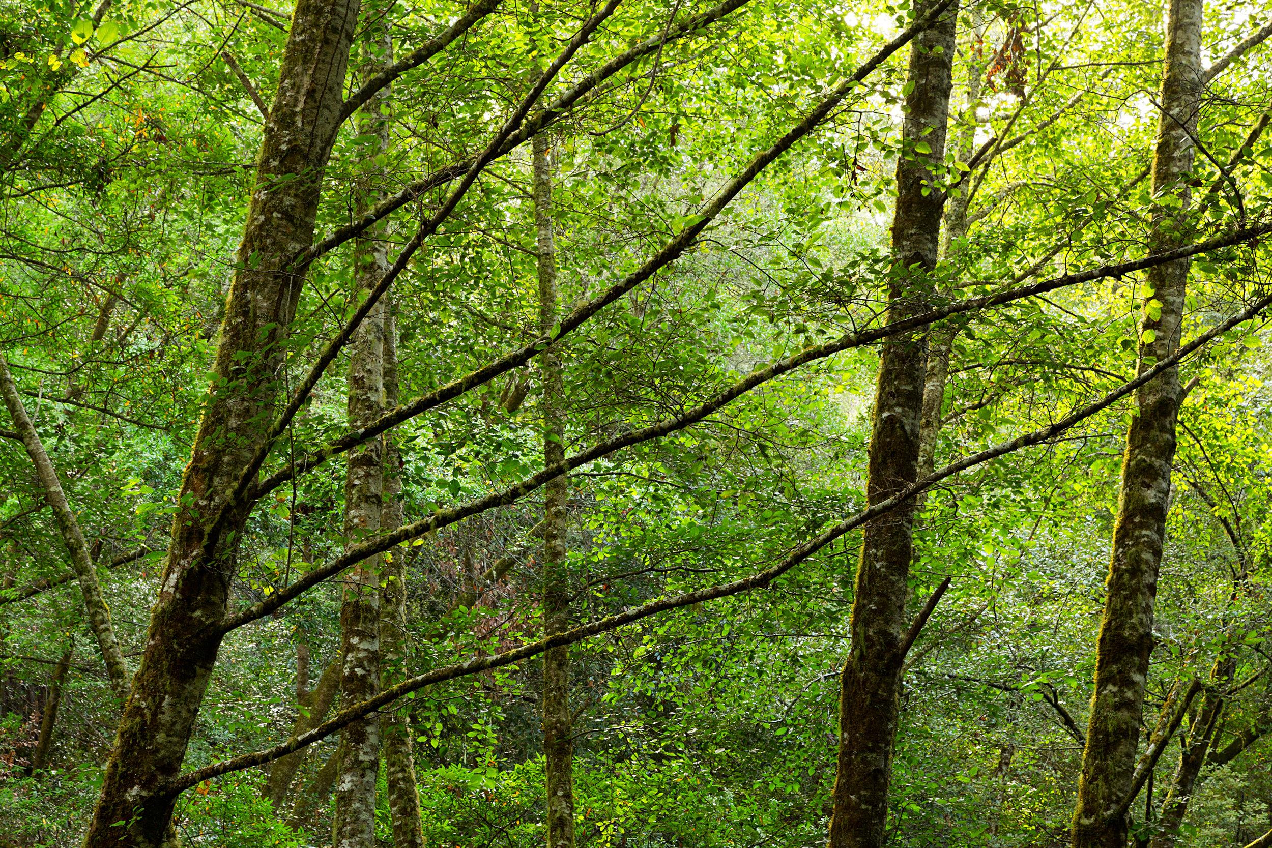 Pt Reyes Bear Creek Trail-3.jpg