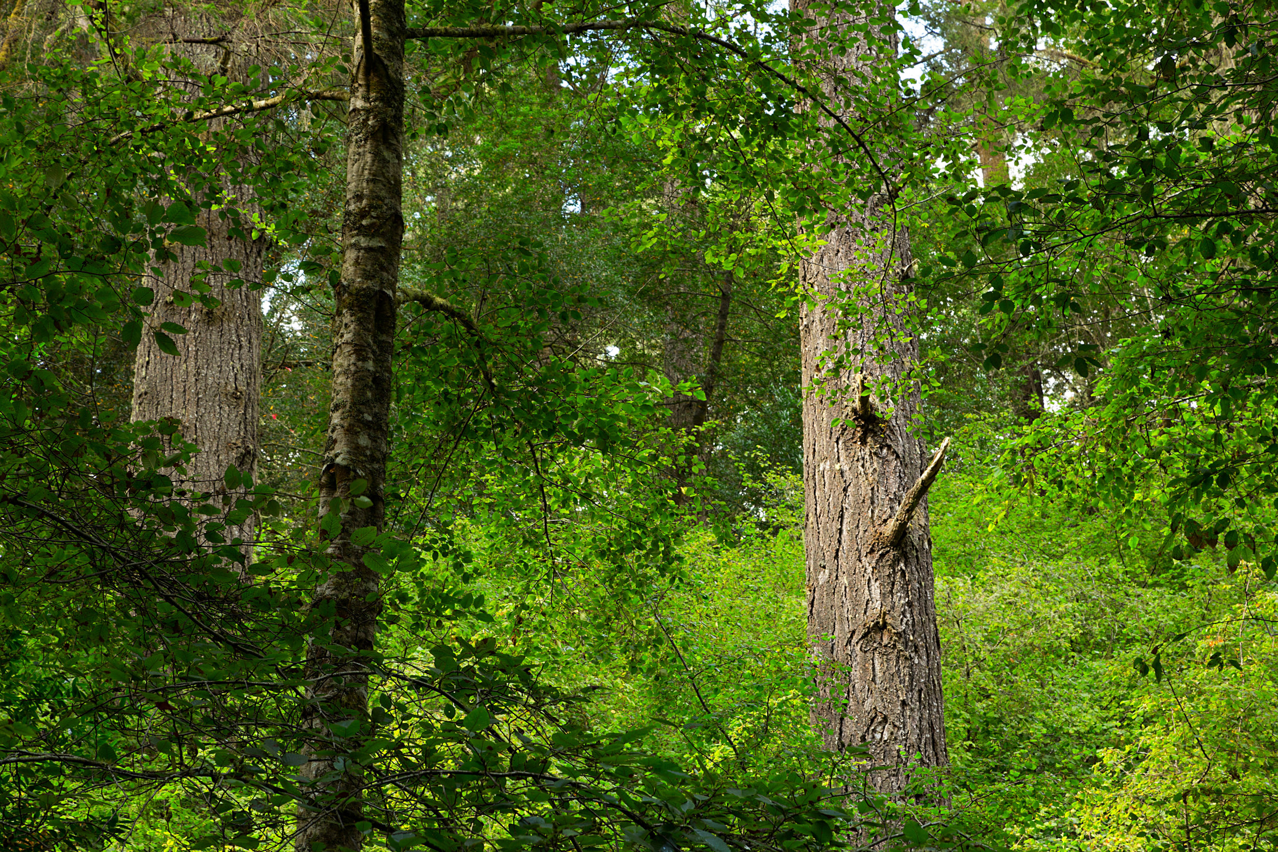 Pt Reyes Bear Creek Trail-6.jpg