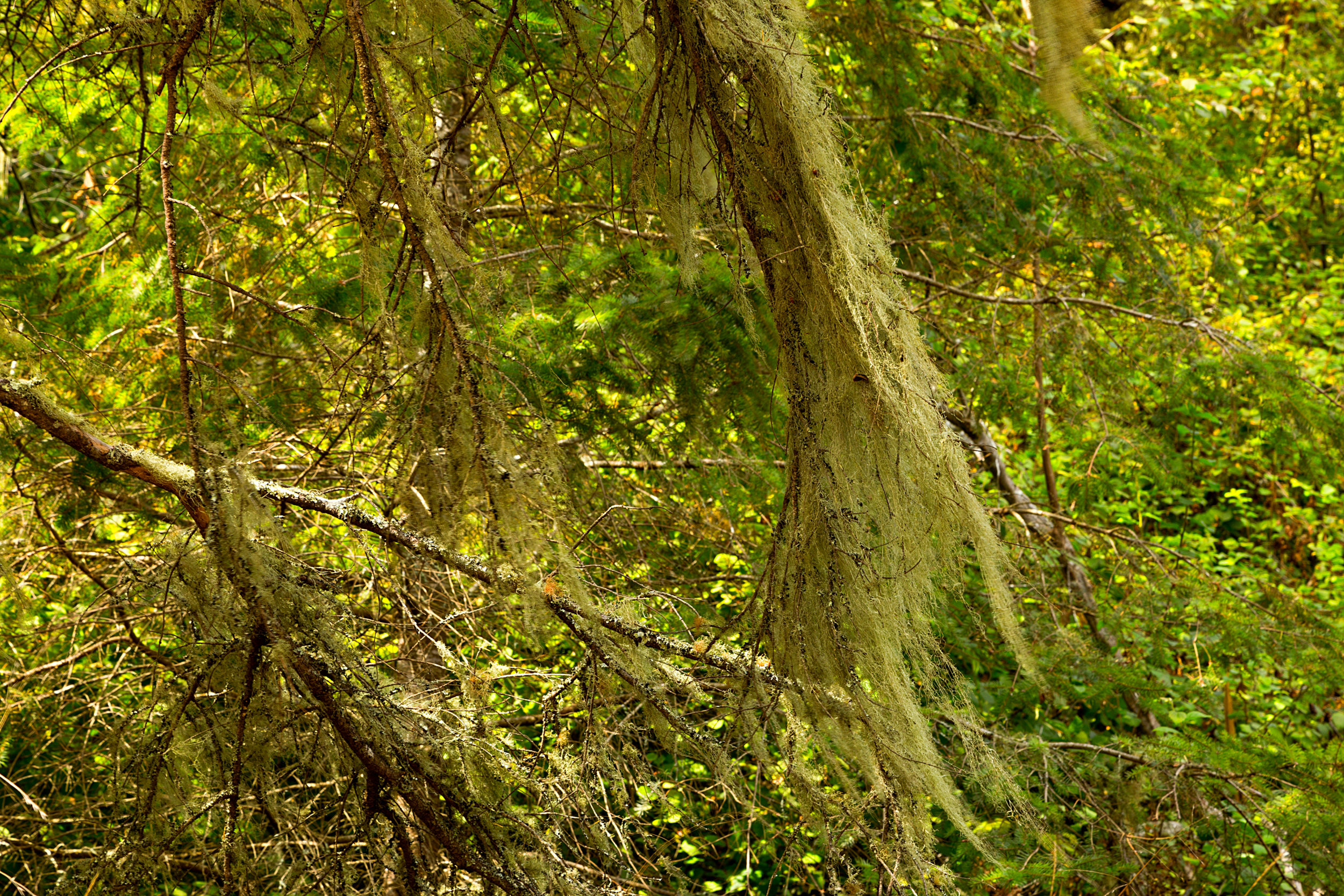 Pt Reyes Bear Creek Trail-10.jpg
