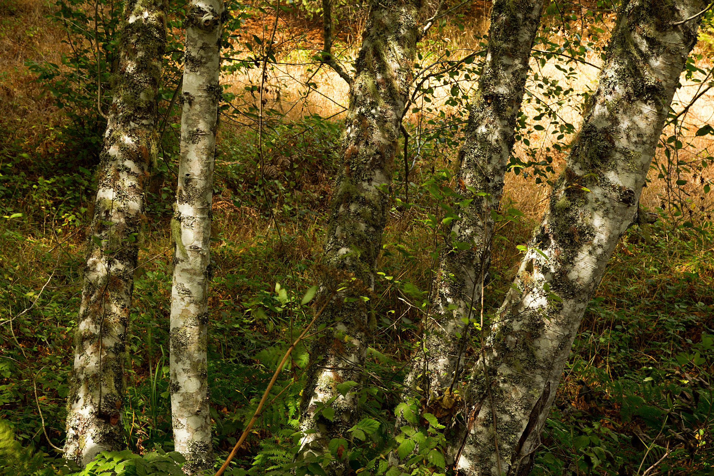 Pt Reyes Bear Creek Trail-12.jpg