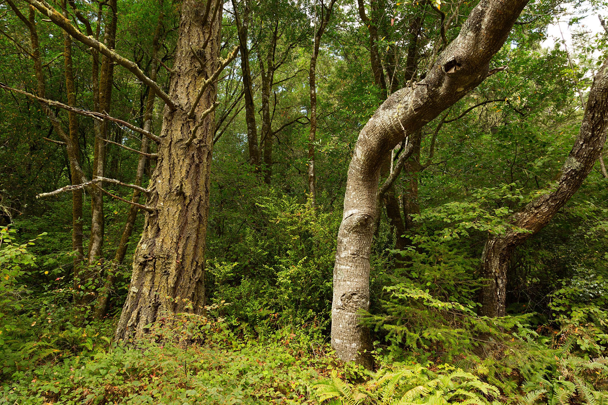 Pt Reyes Bear Creek Trail-13.jpg