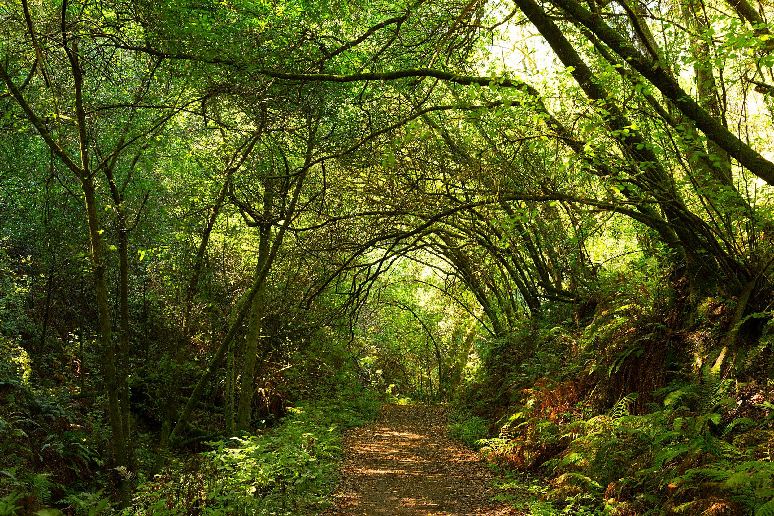 Pt Reyes Bear Creek Trail-17.jpg