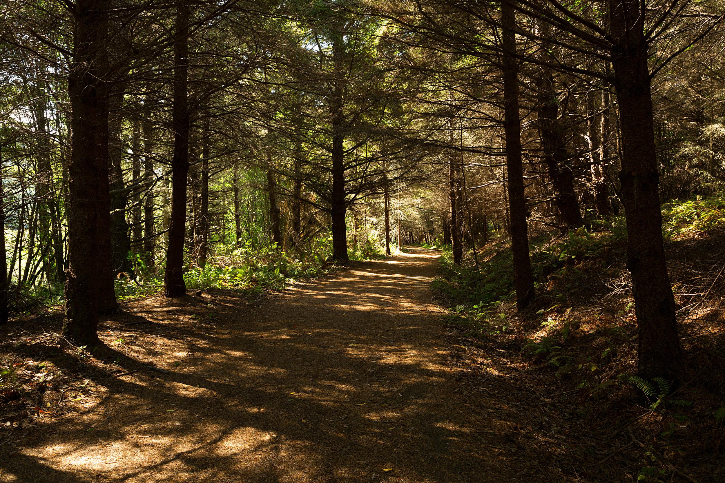 Pt Reyes Bear Creek Trail-19.jpg