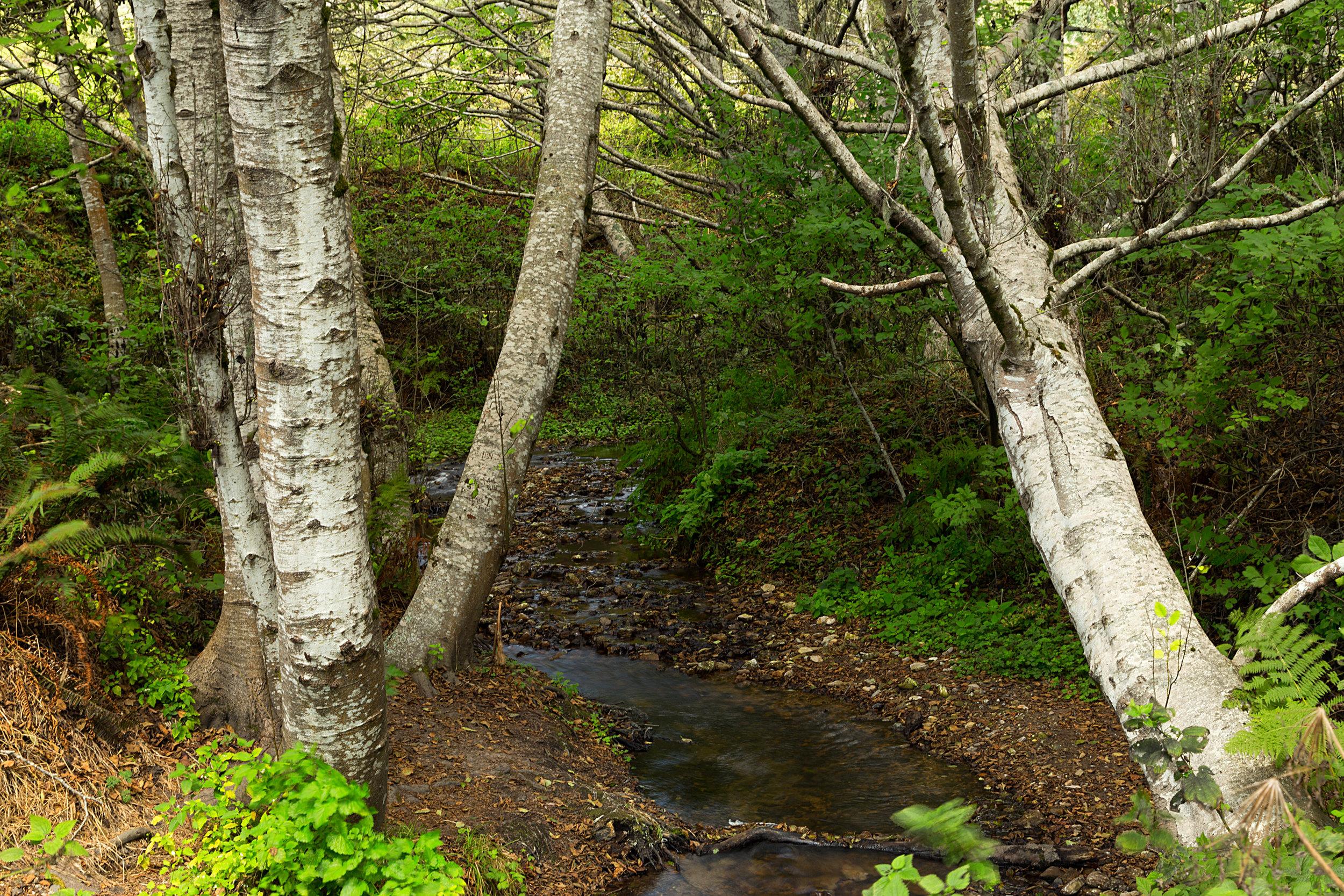 Pt Reyes Bear Creek Trail-24.jpg