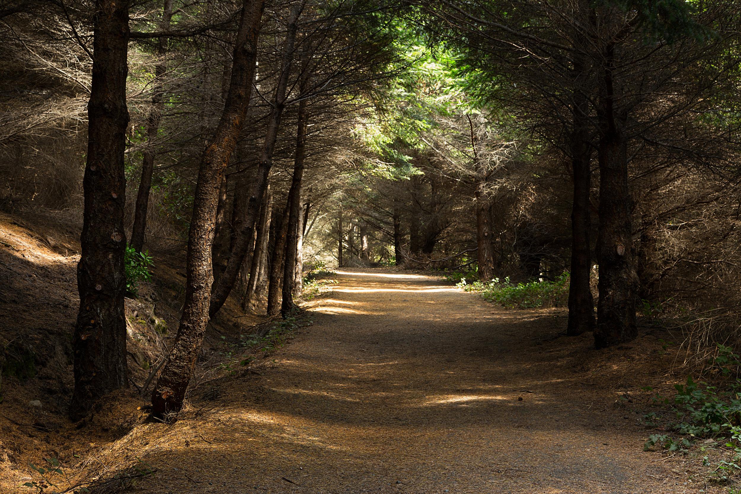 Pt Reyes Bear Creek Trail-25.jpg