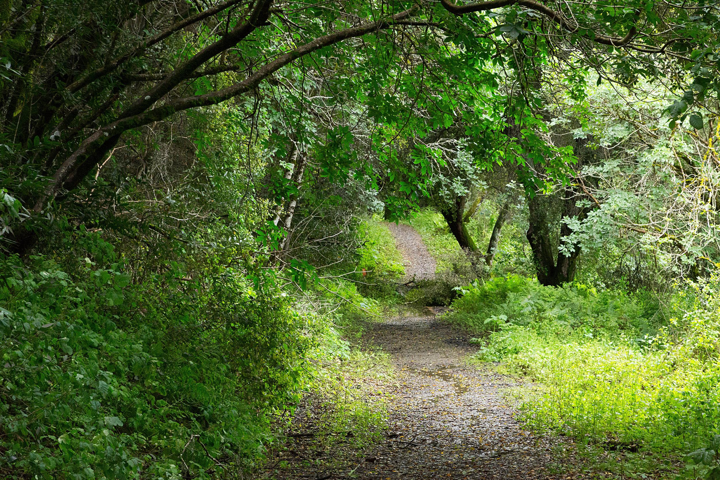 Bear Creek Trail-2.jpg
