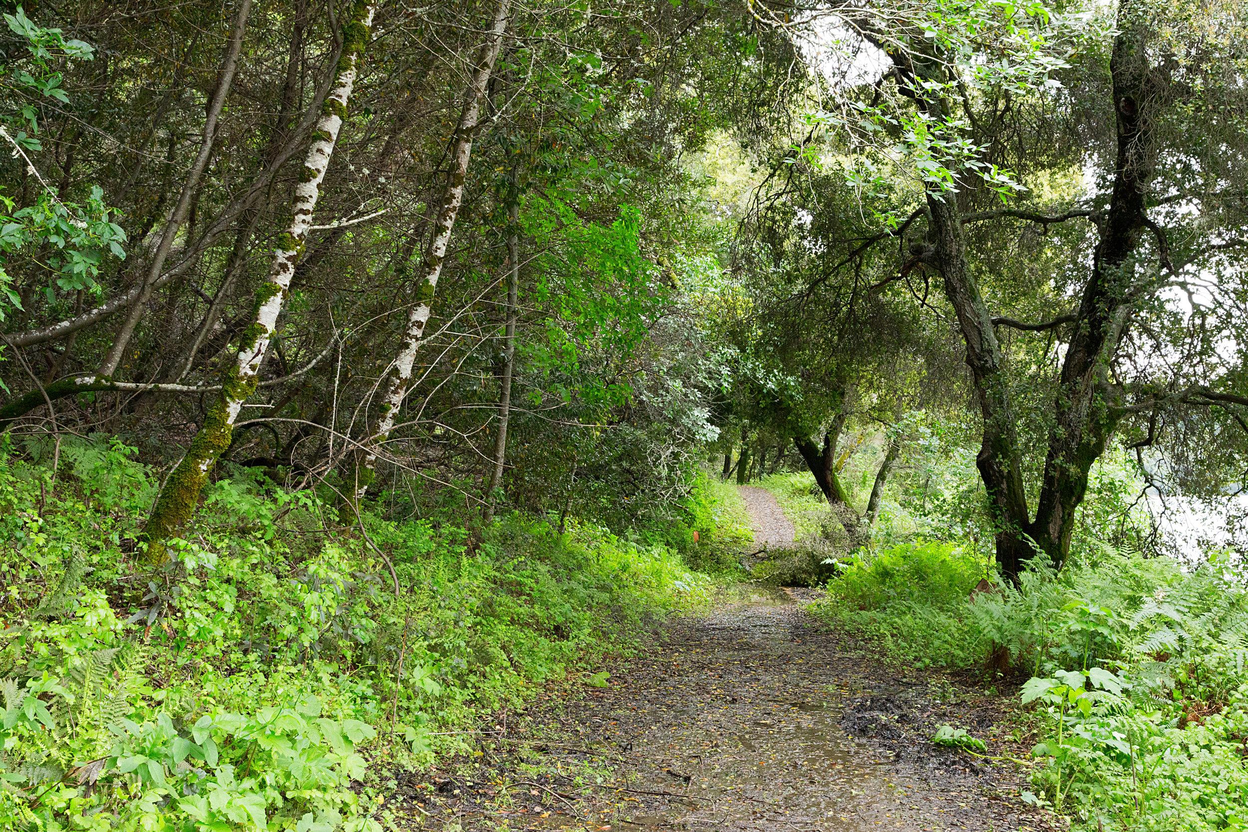 Bear Creek Trail-3.jpg