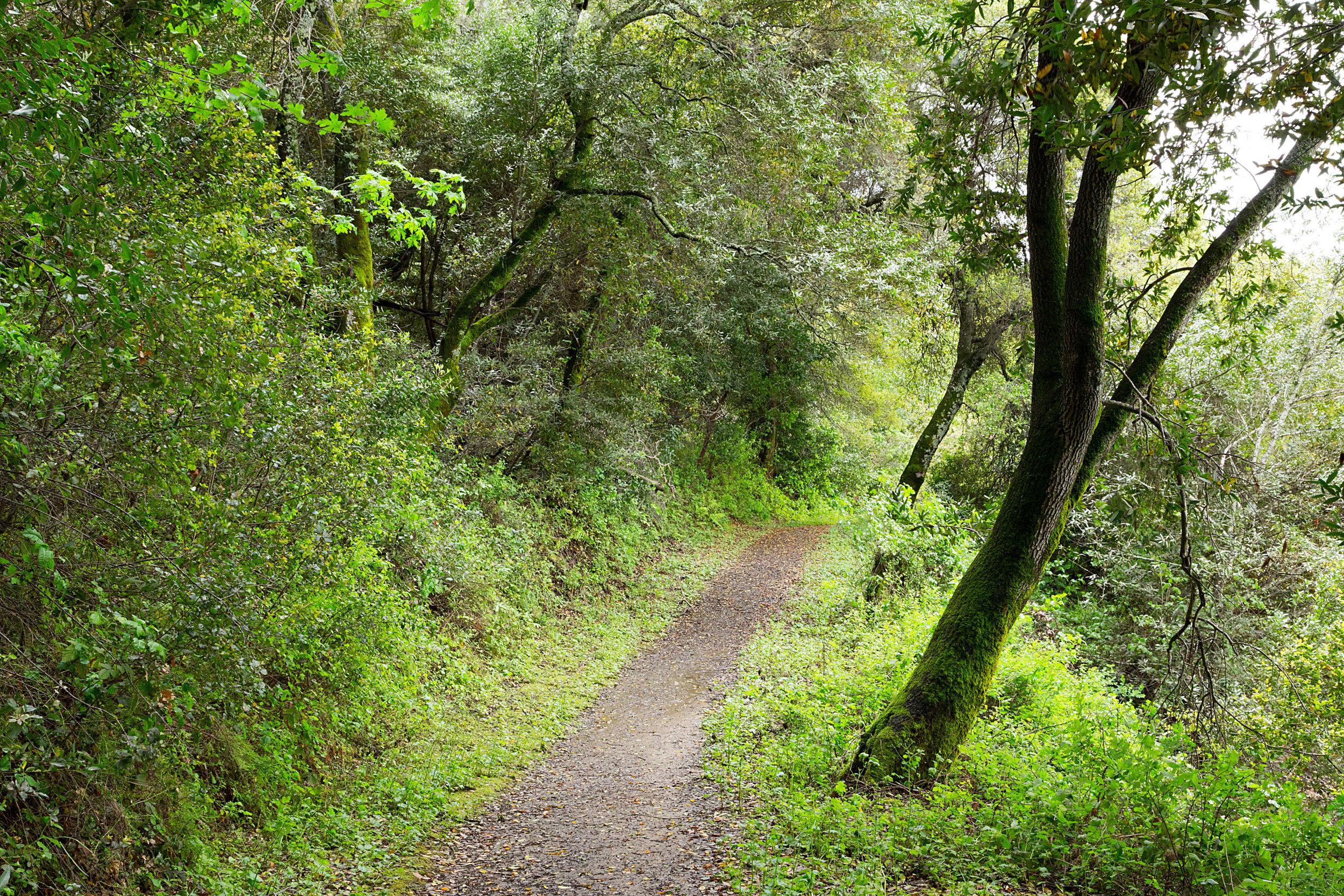 Bear Creek Trail-4.jpg