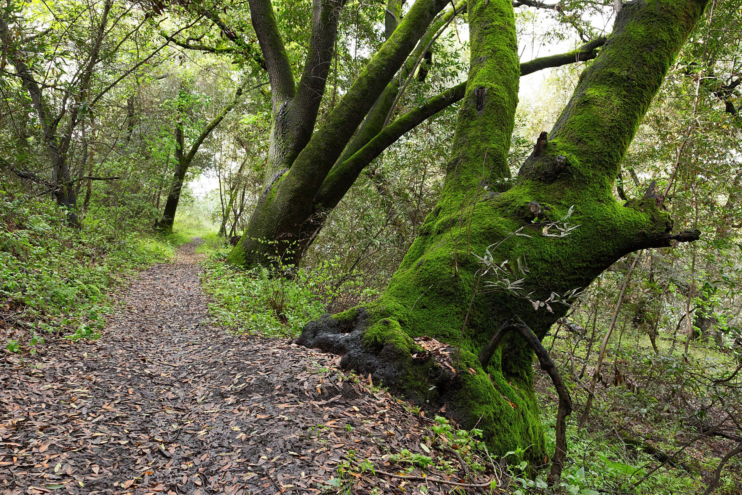 Bear Creek Trail-7.jpg