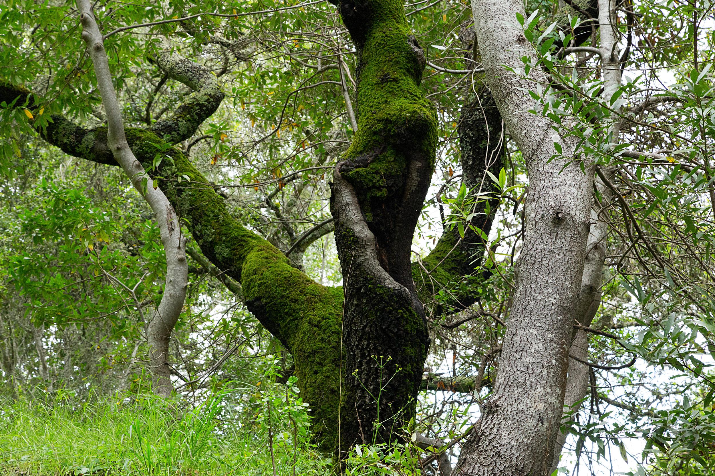 Bear Creek Trail-8.jpg