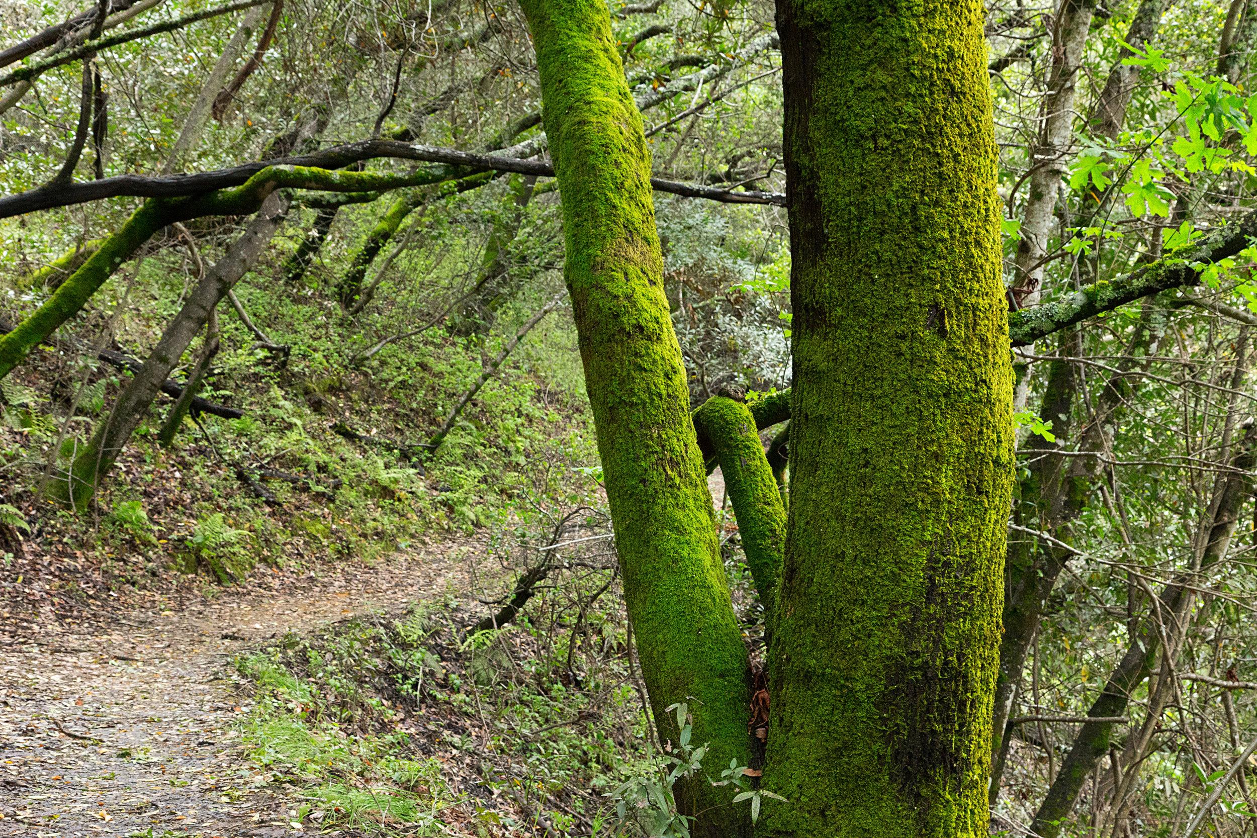 Bear Creek Trail-9.jpg