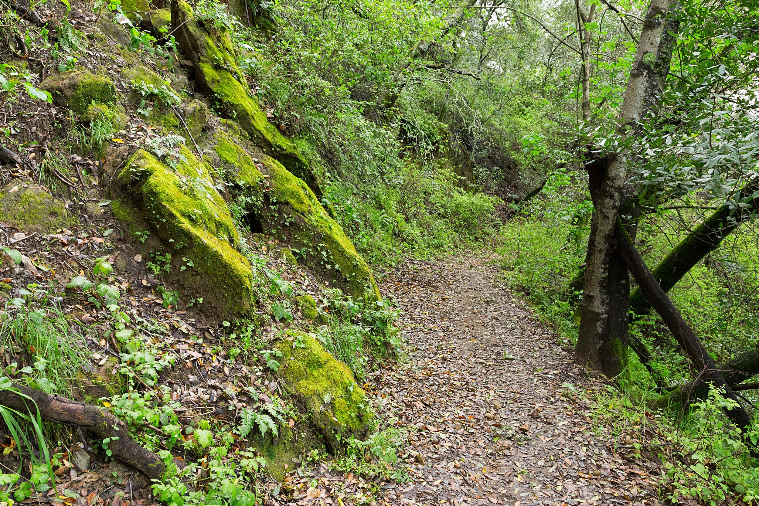 Bear Creek Trail-10.jpg