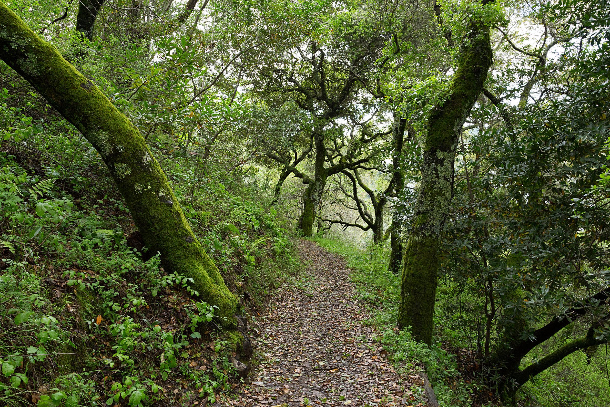 Bear Creek Trail-11.jpg