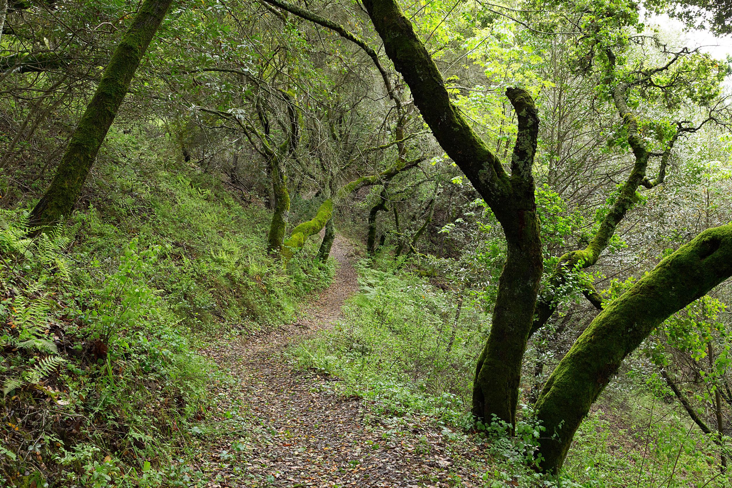Bear Creek Trail-12.jpg