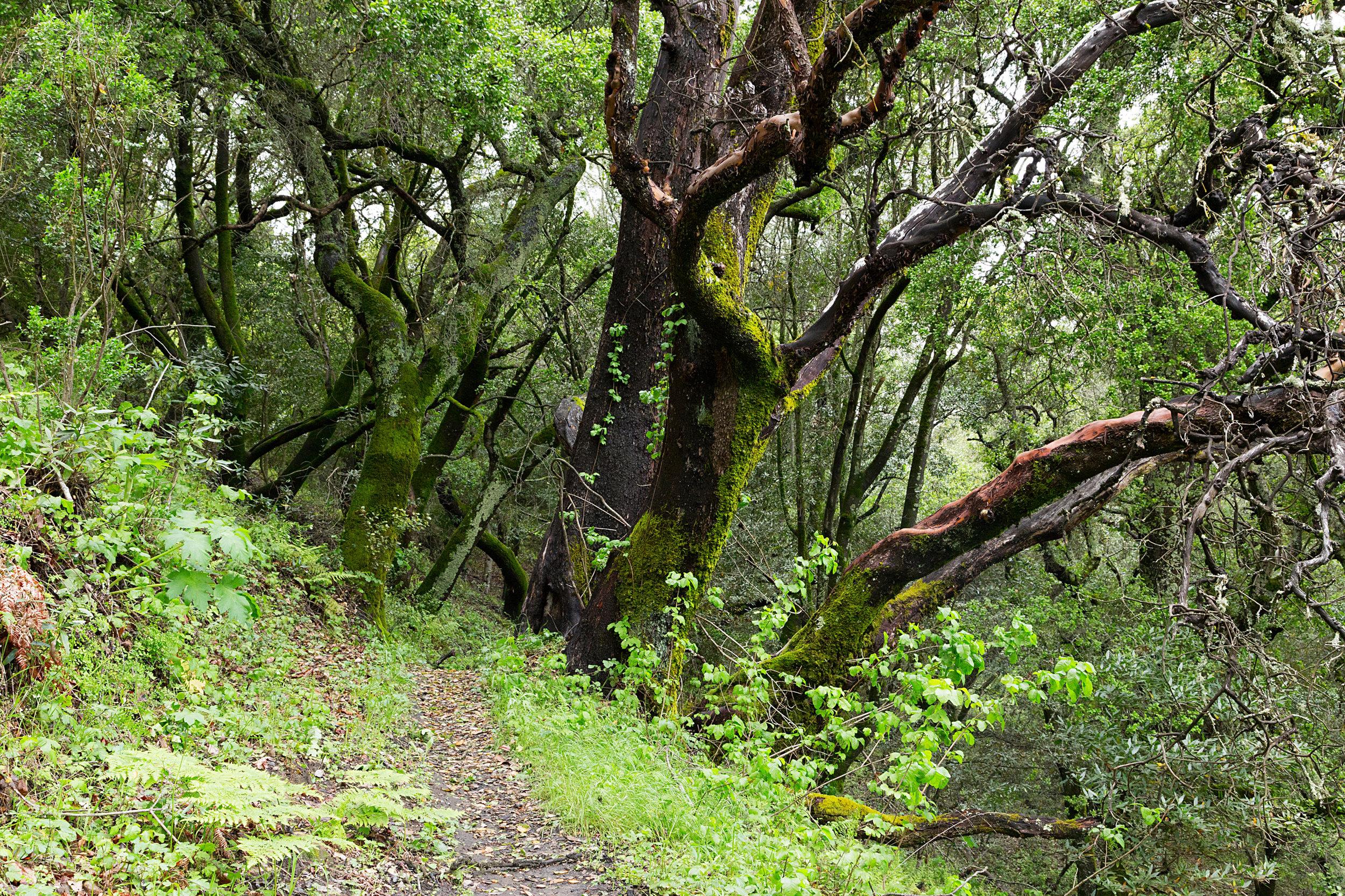 Bear Creek Trail-13.jpg