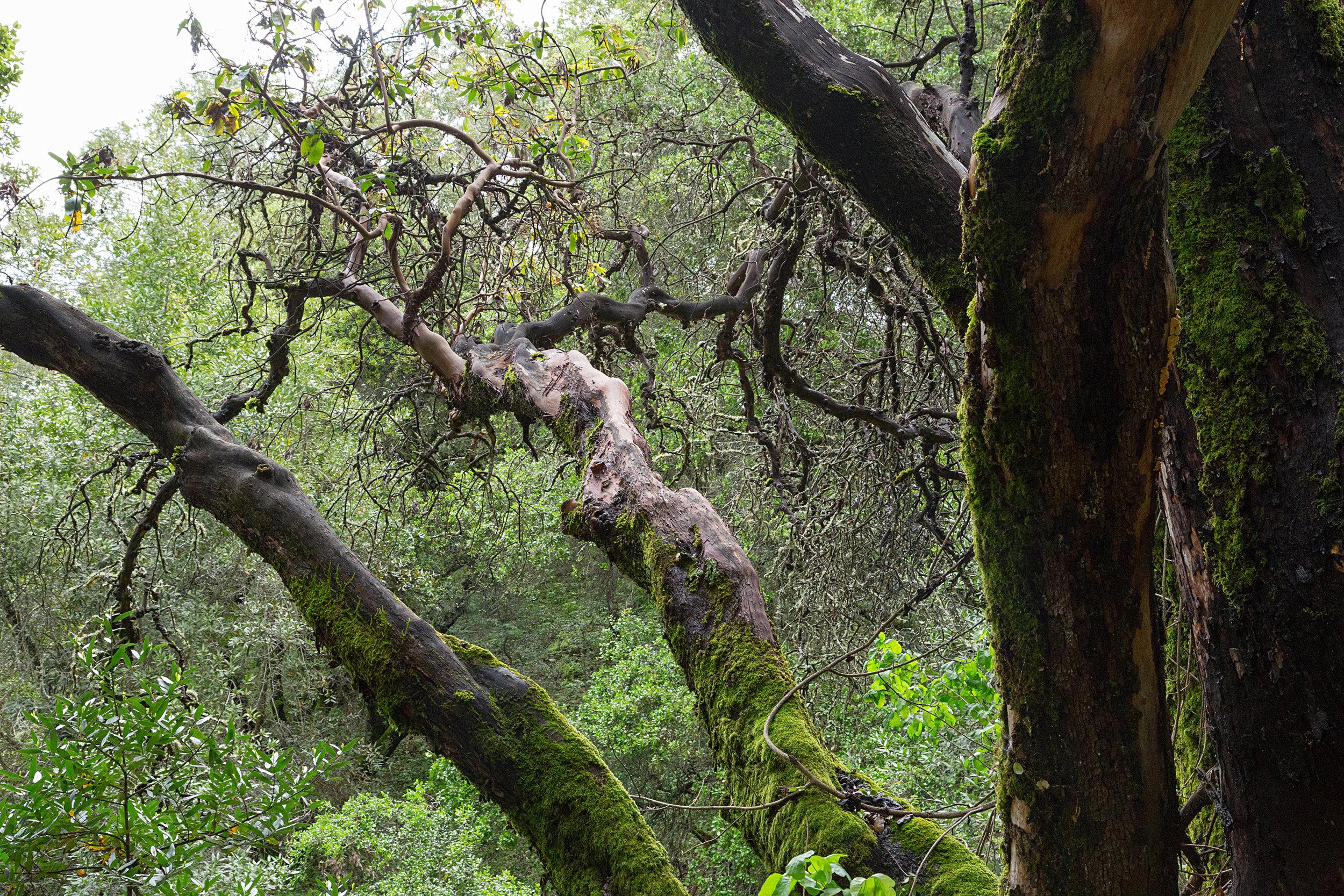 Bear Creek Trail-14.jpg