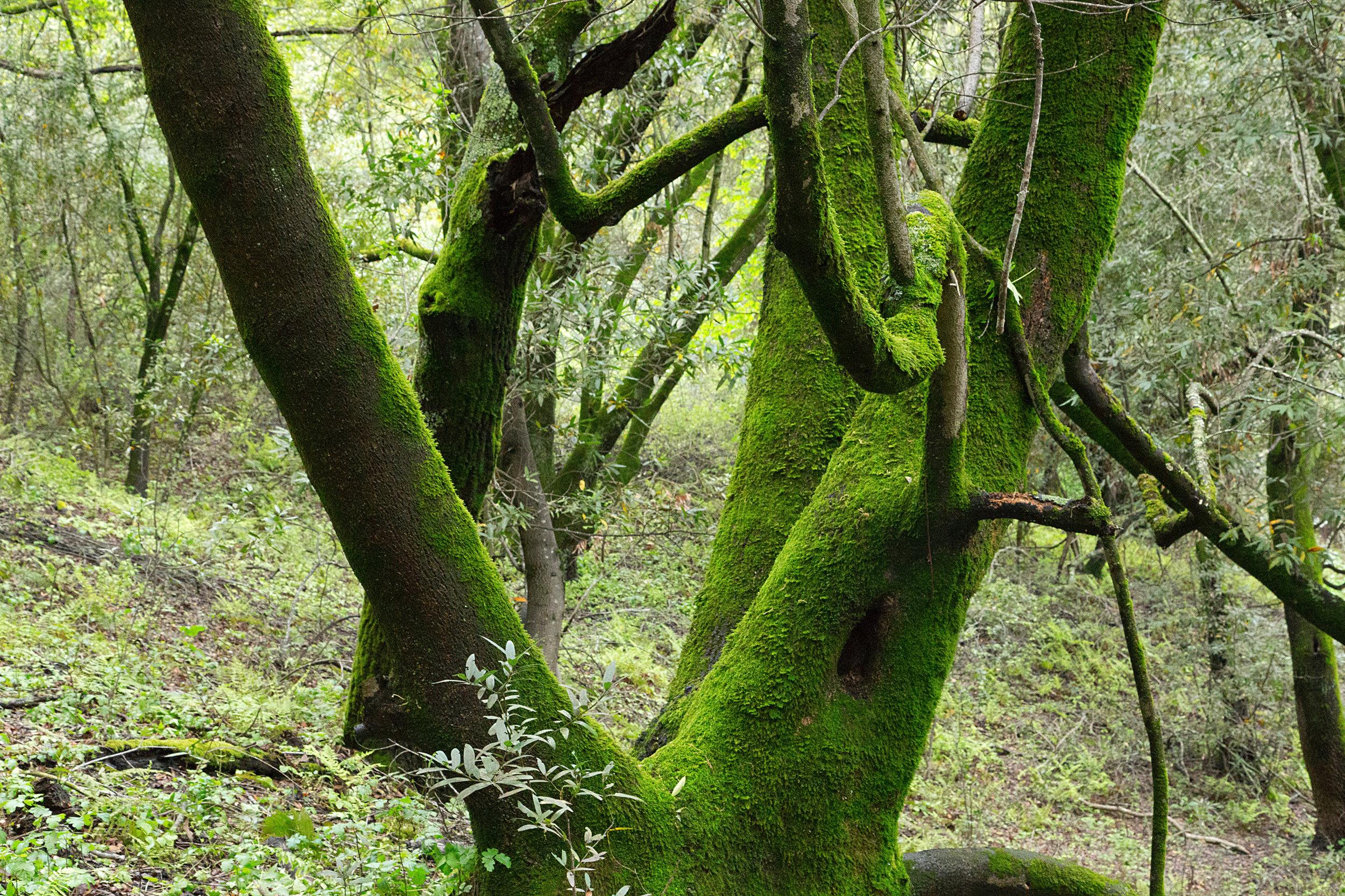 Bear Creek Trail-15.jpg