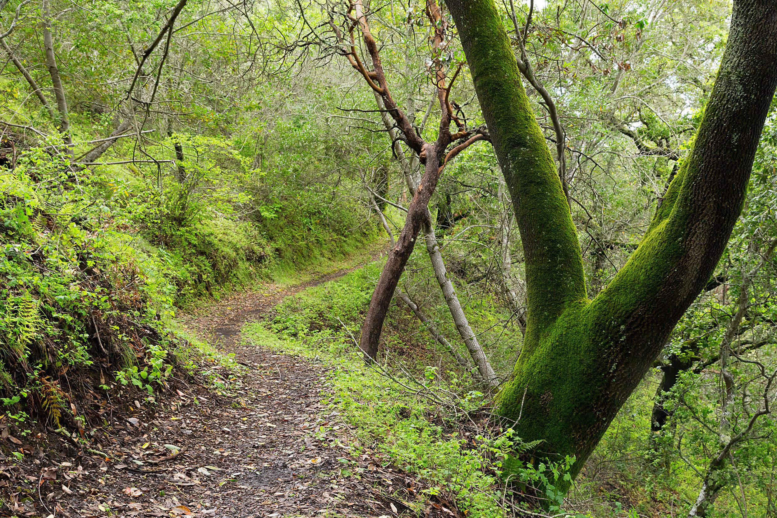 Bear Creek Trail-18.jpg