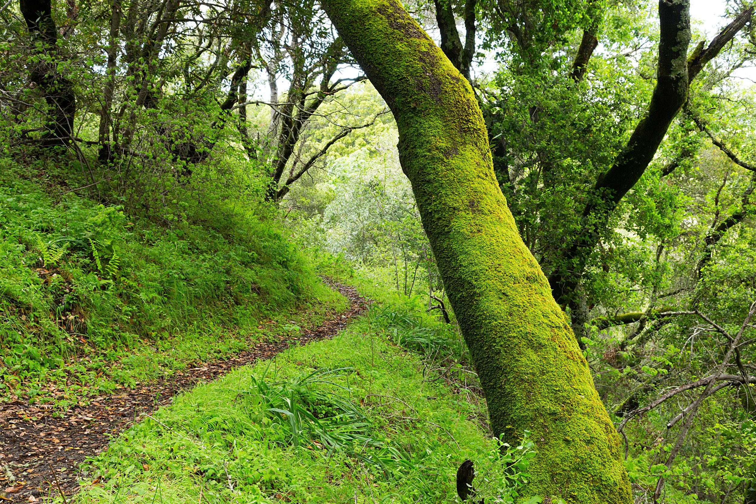 Bear Creek Trail-20.jpg