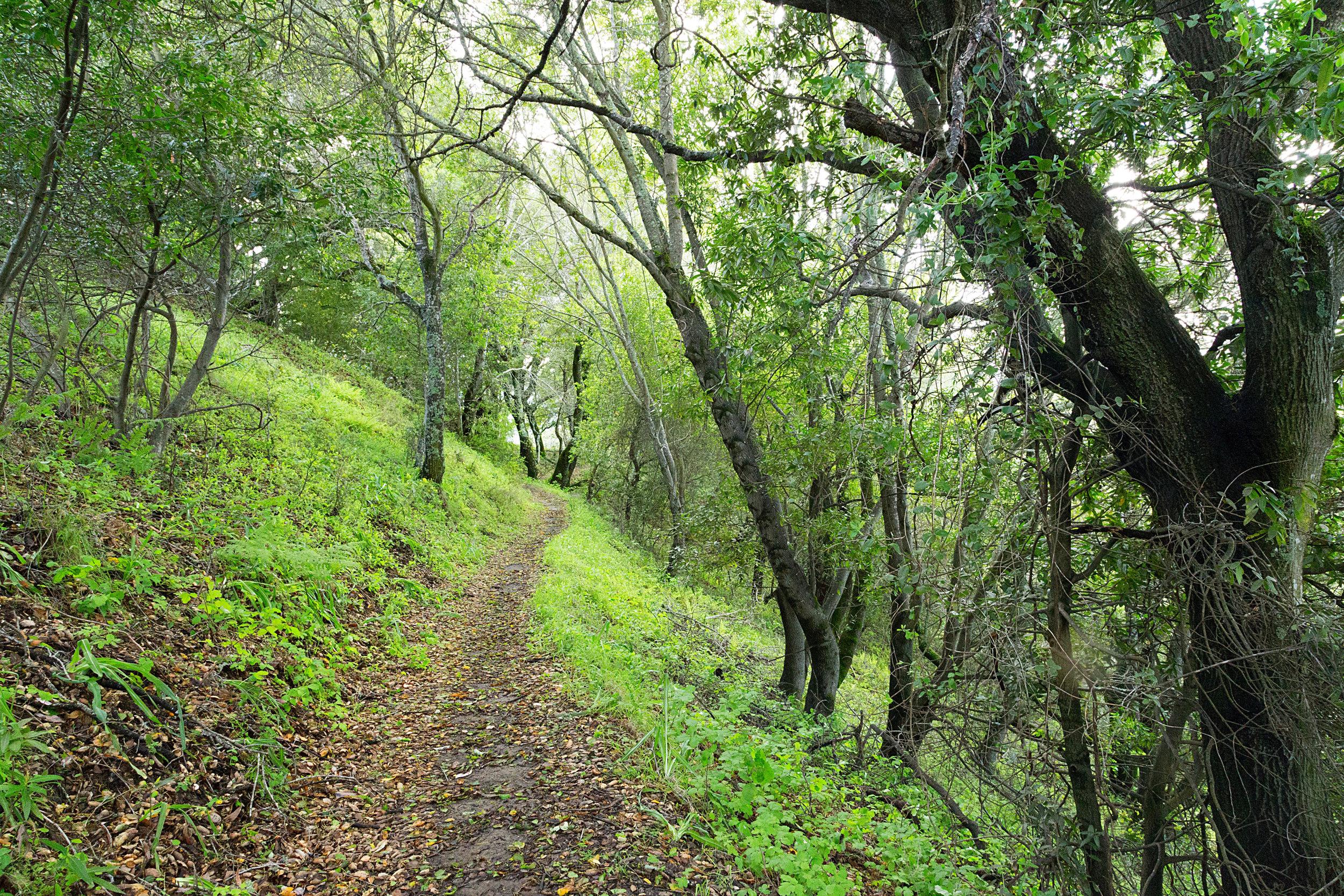 Bear Creek Trail-24.jpg