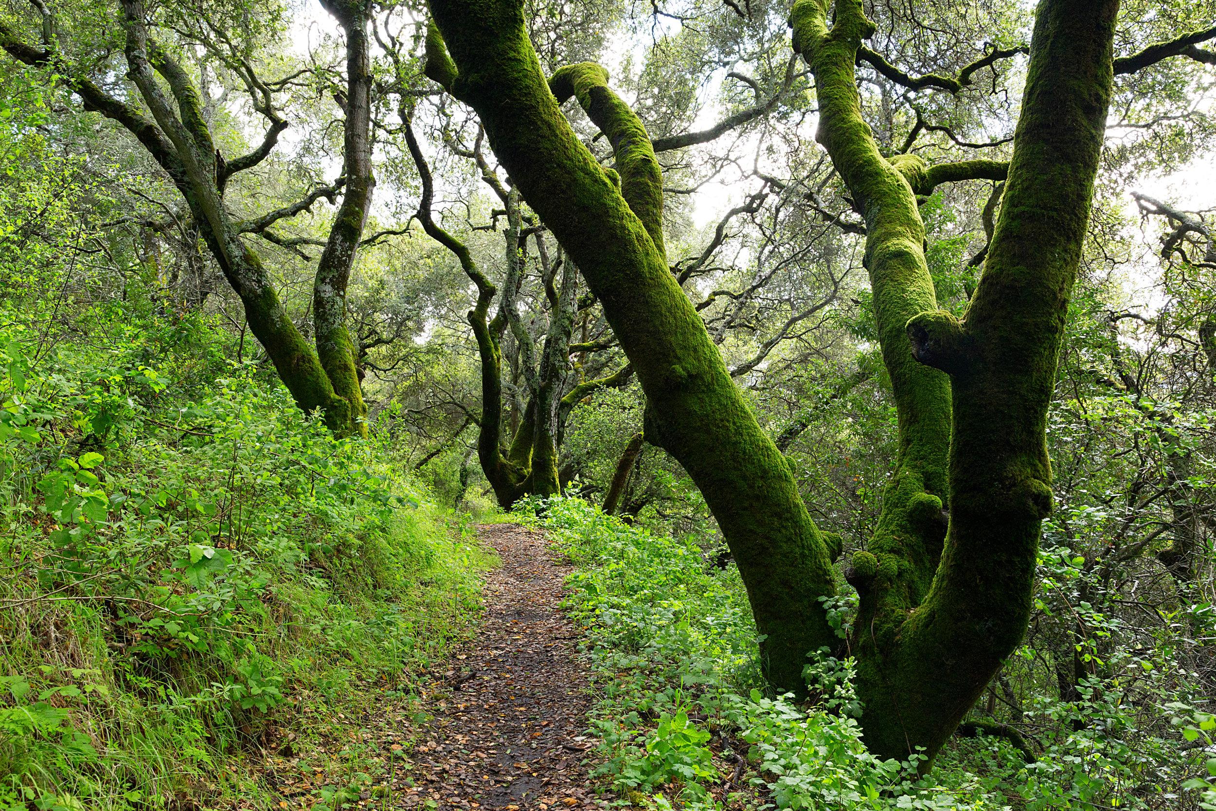 Bear Creek Trail-25.jpg