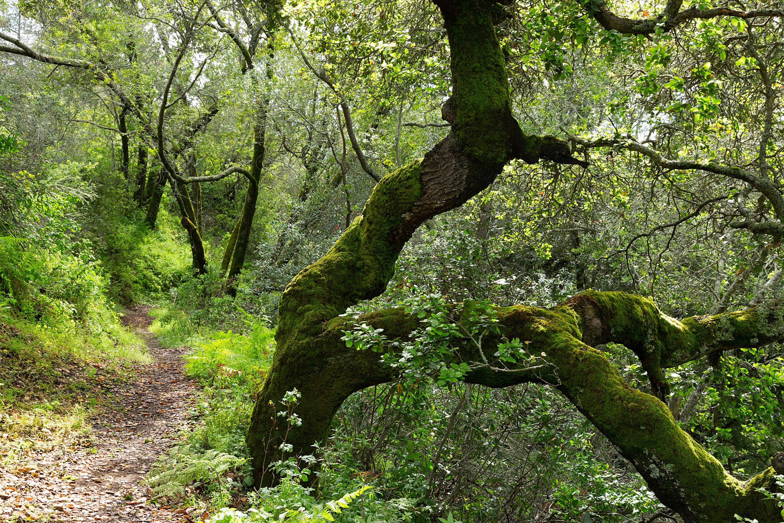 Bear Creek Trail-26.jpg