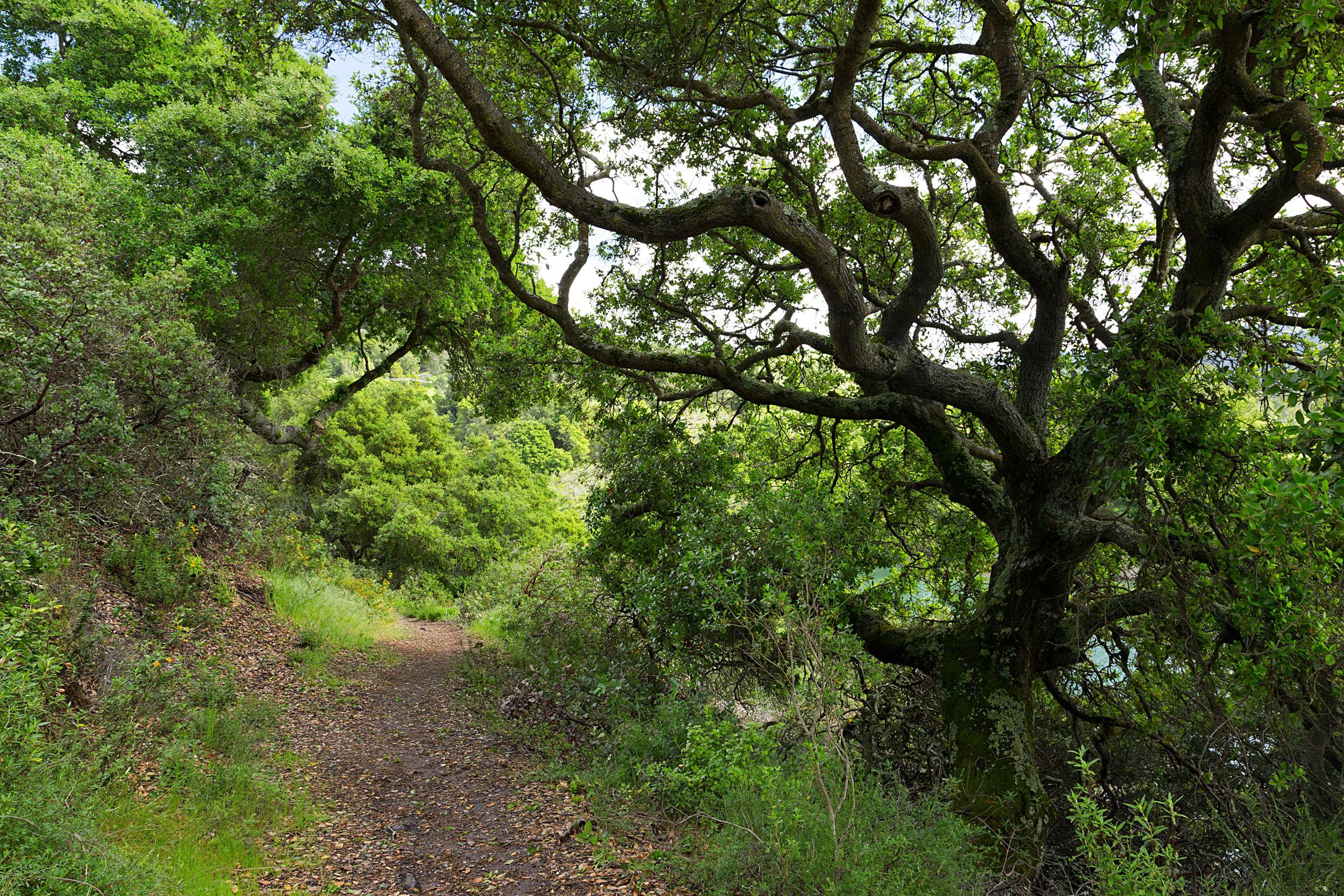Bear Creek Trail-27.jpg