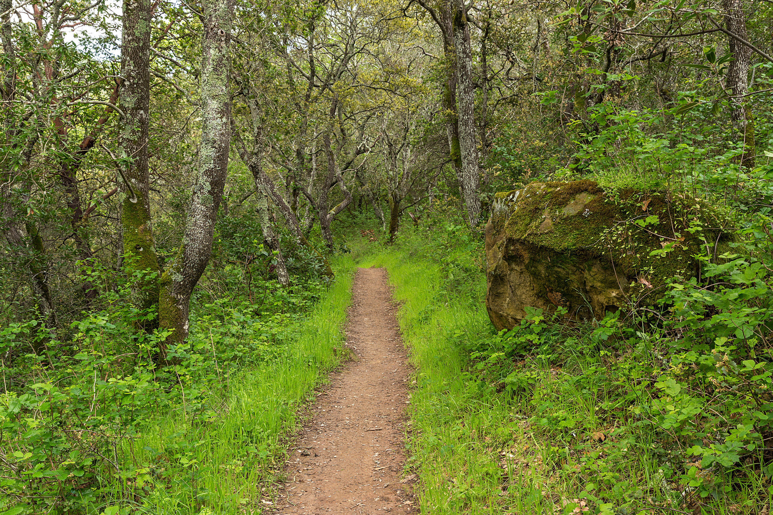 Madrone Canyon Trail-3.jpg