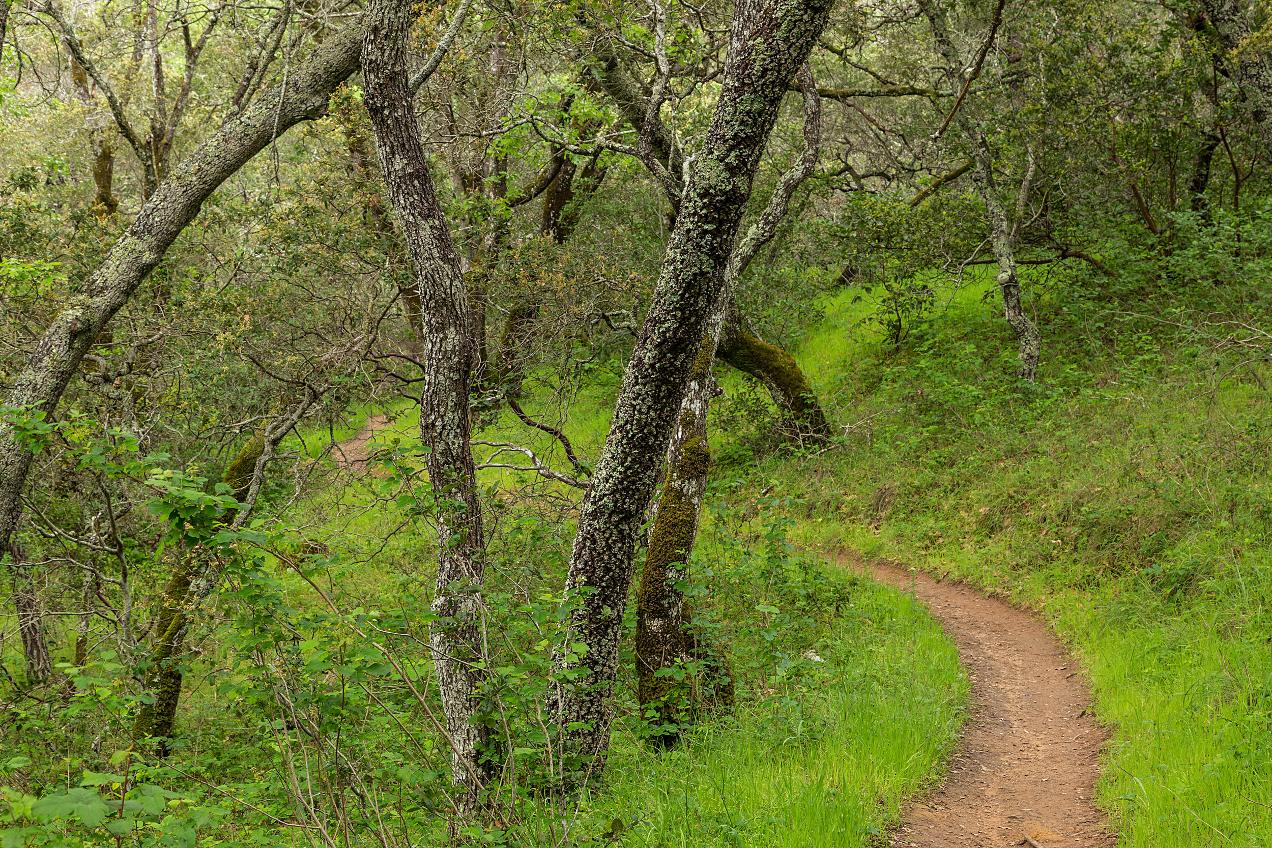 Madrone Canyon Trail-4.jpg