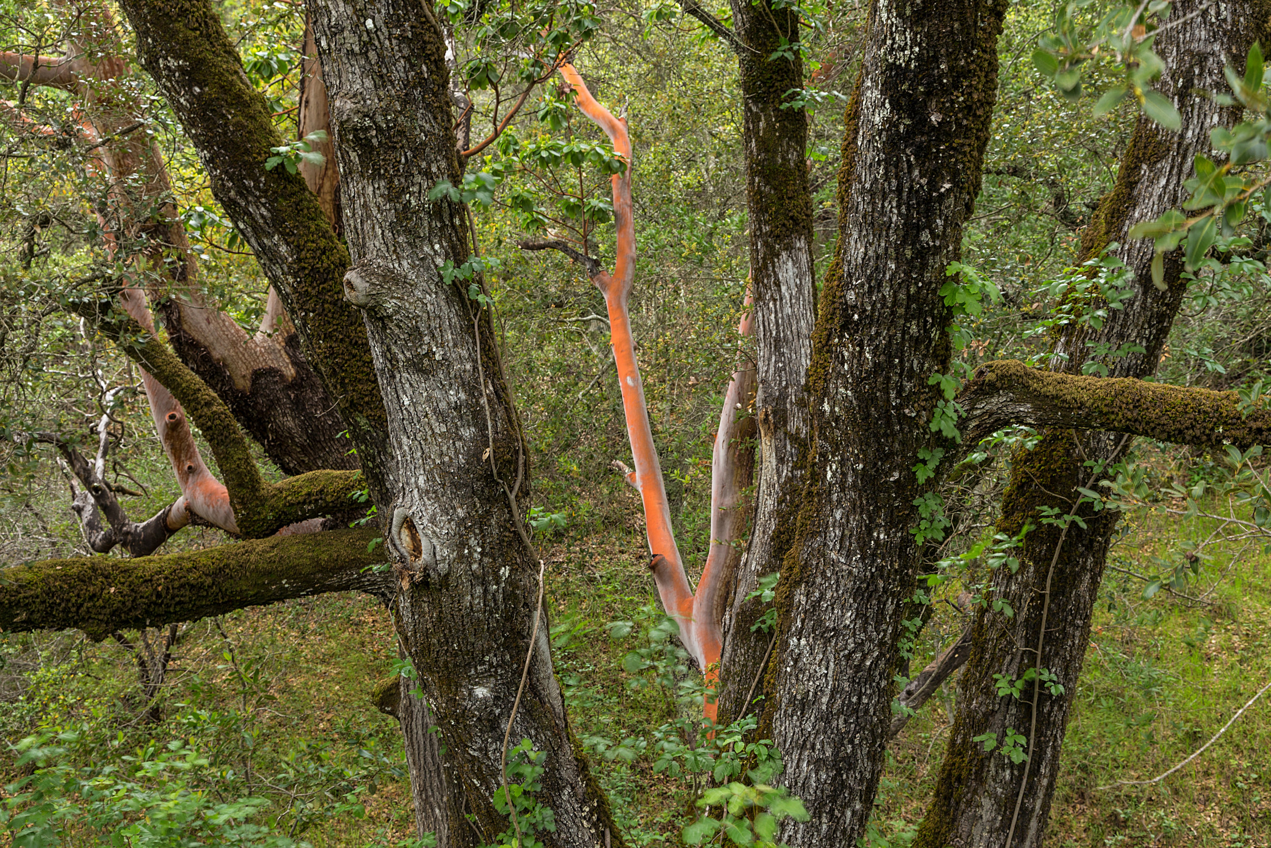 Madrone Canyon Trail-7.jpg