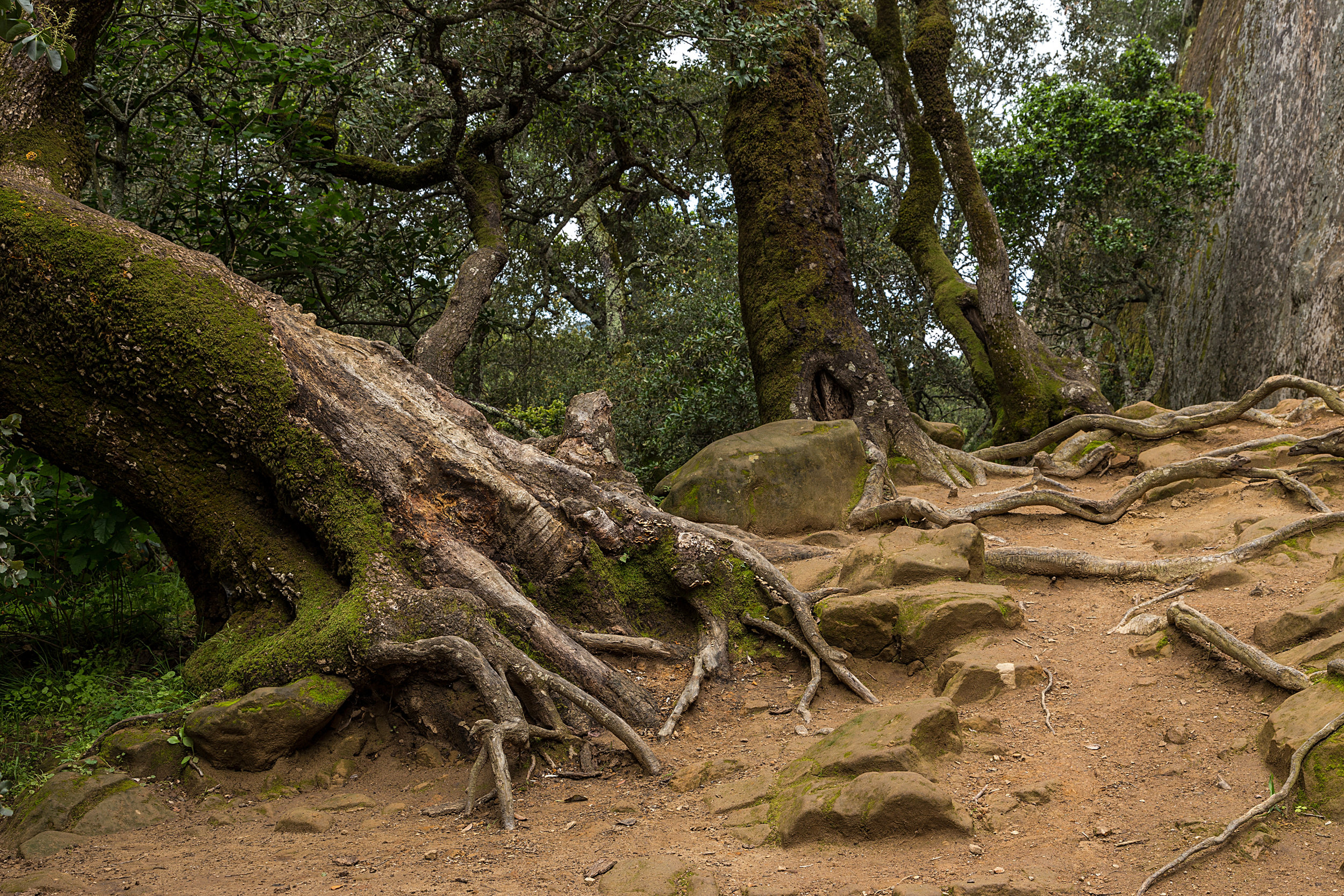 Madrone Canyon Trail-9.jpg