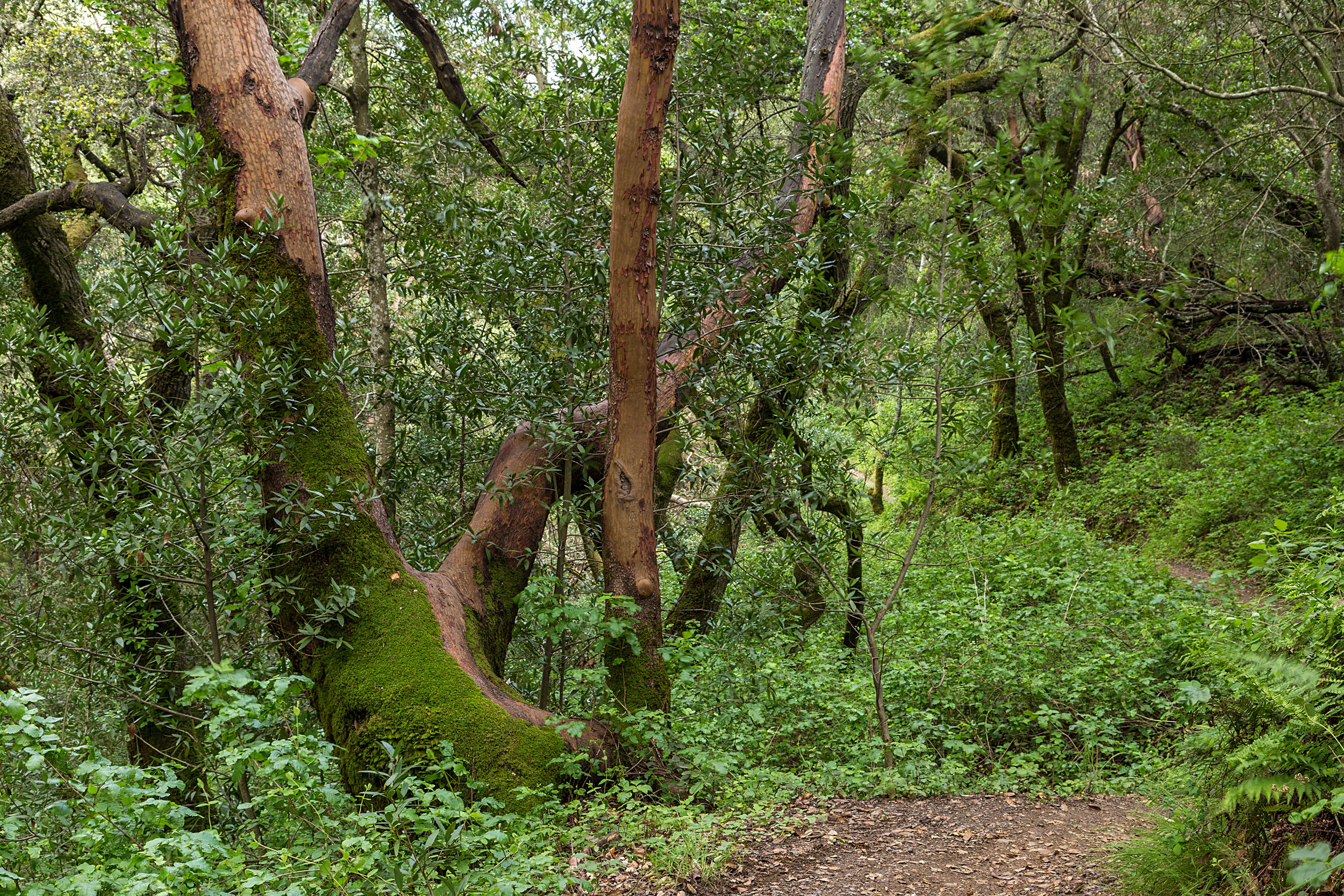 Madrone Canyon Trail-12.jpg