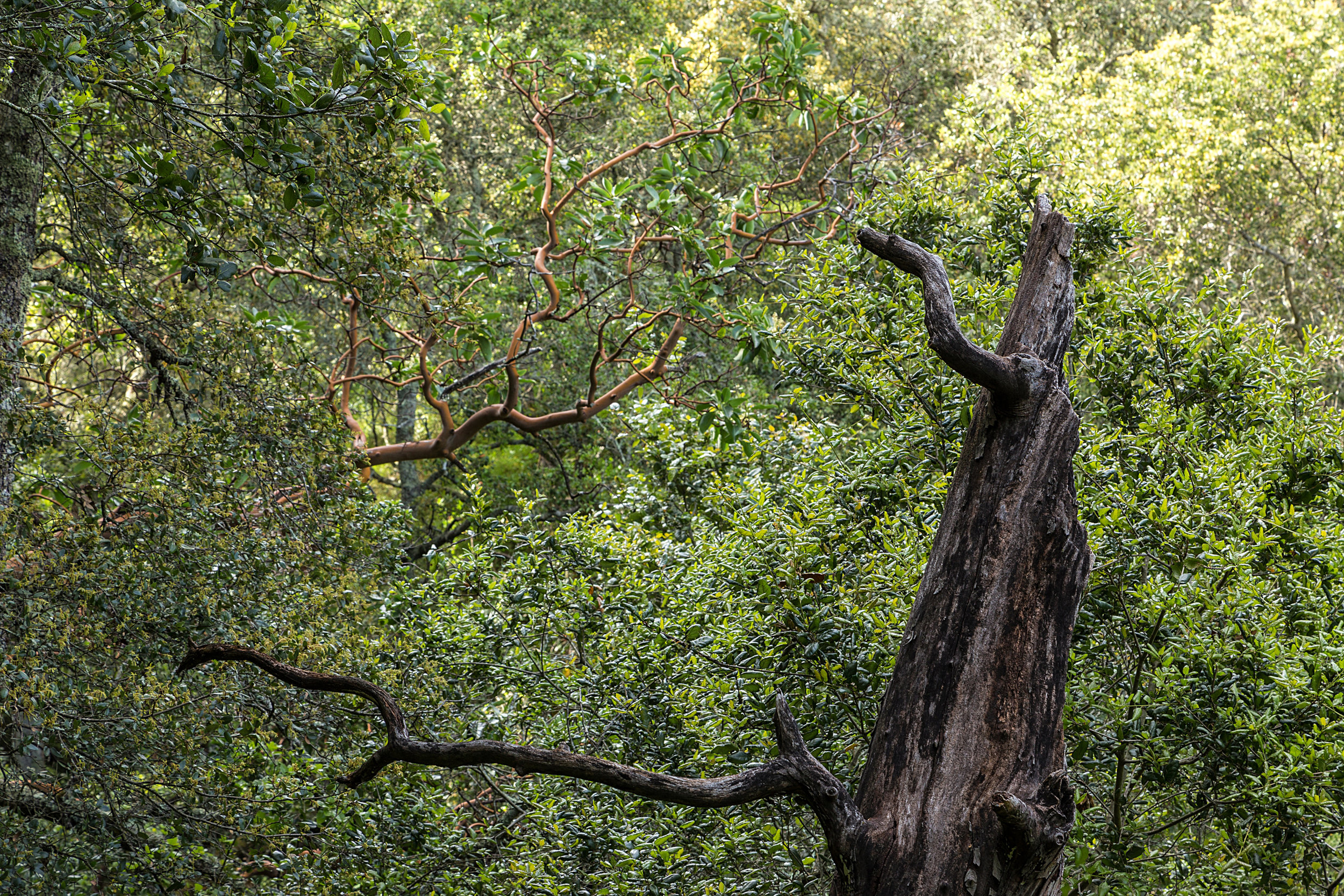 Madrone Canyon Trail-14.jpg