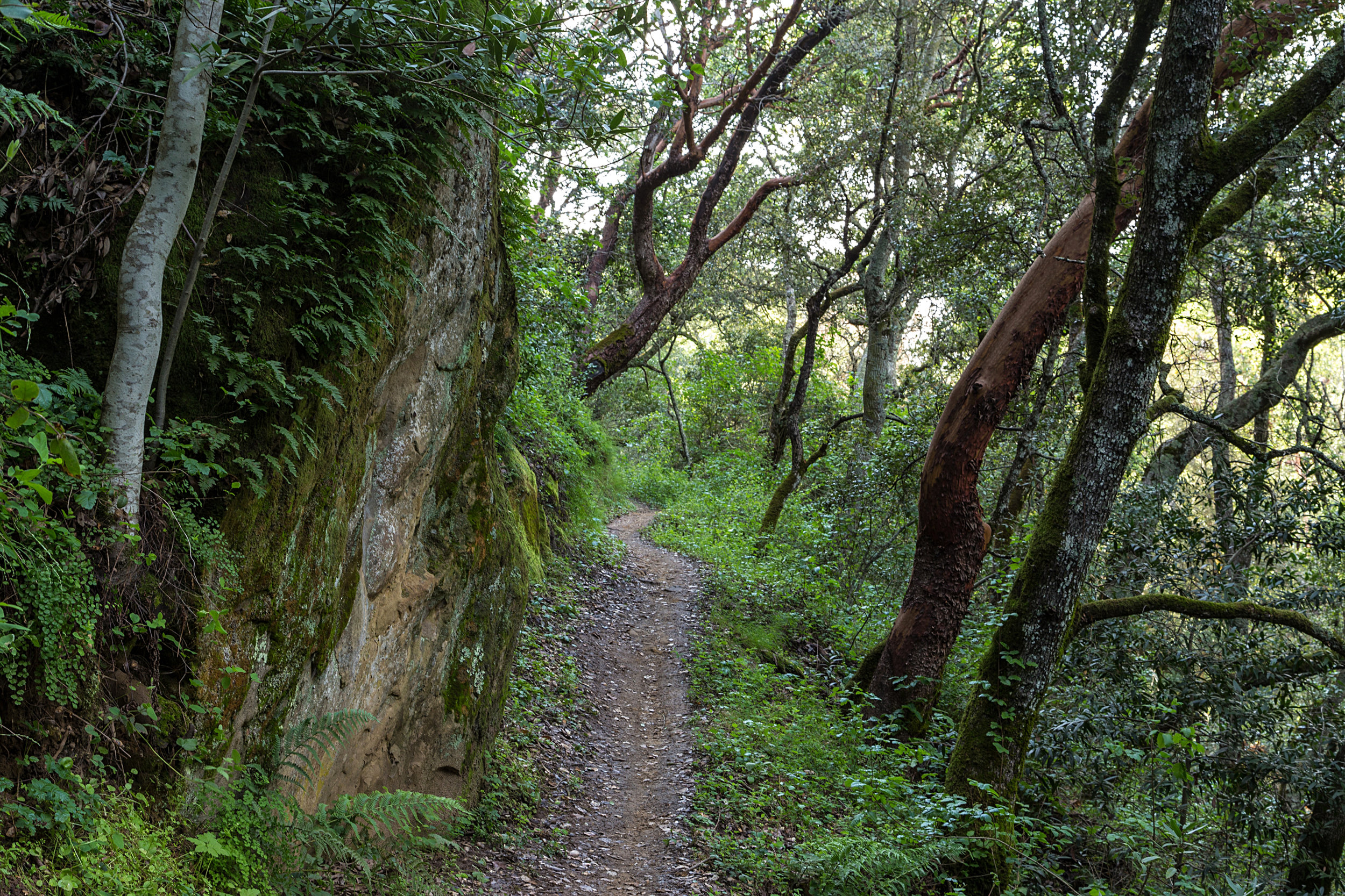 Madrone Canyon Trail-15.jpg