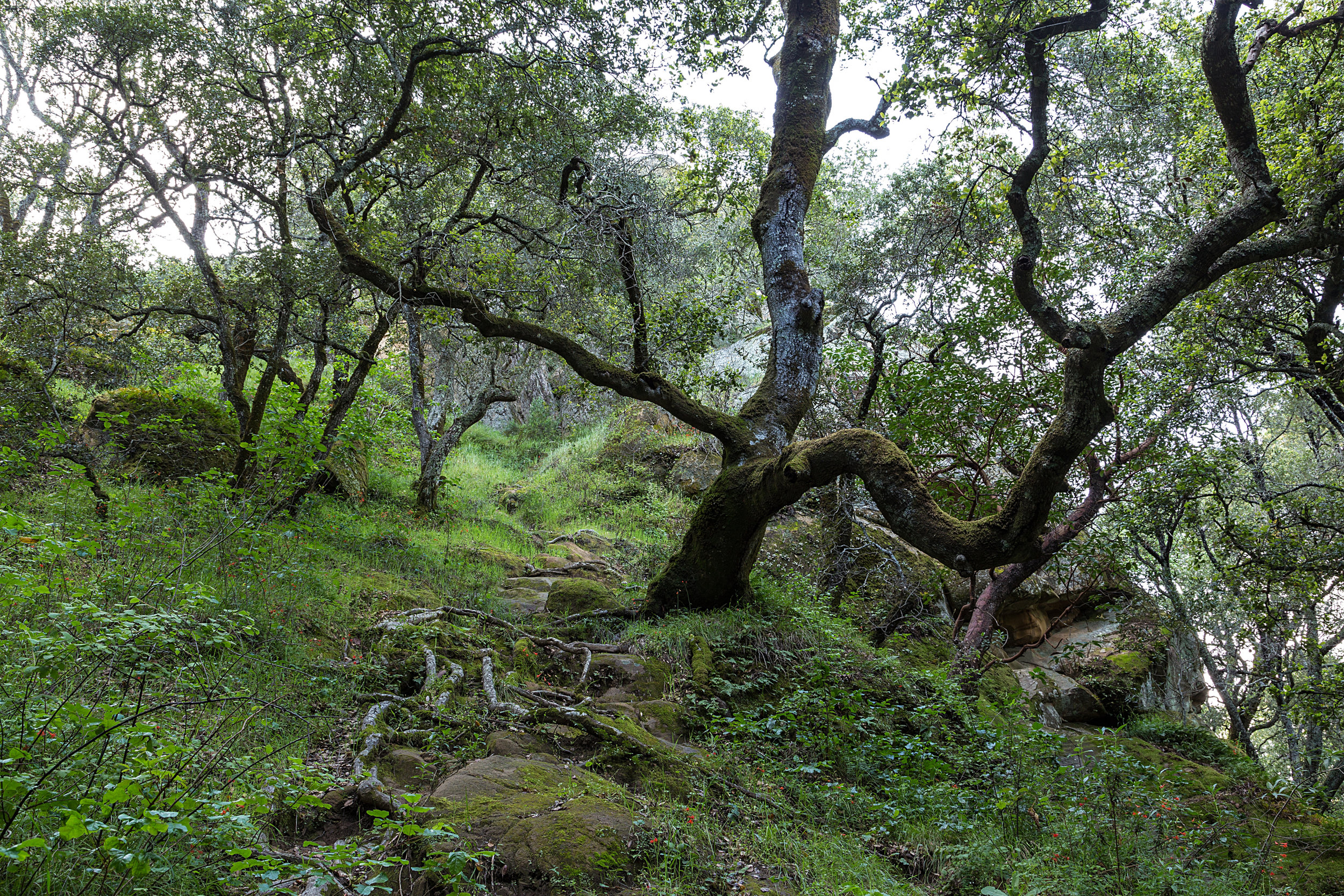 Madrone Canyon Trail-17.jpg