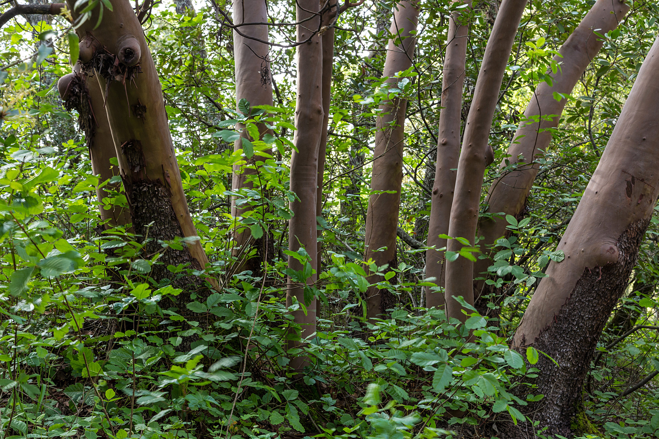 Madrone Canyon Trail-18.jpg