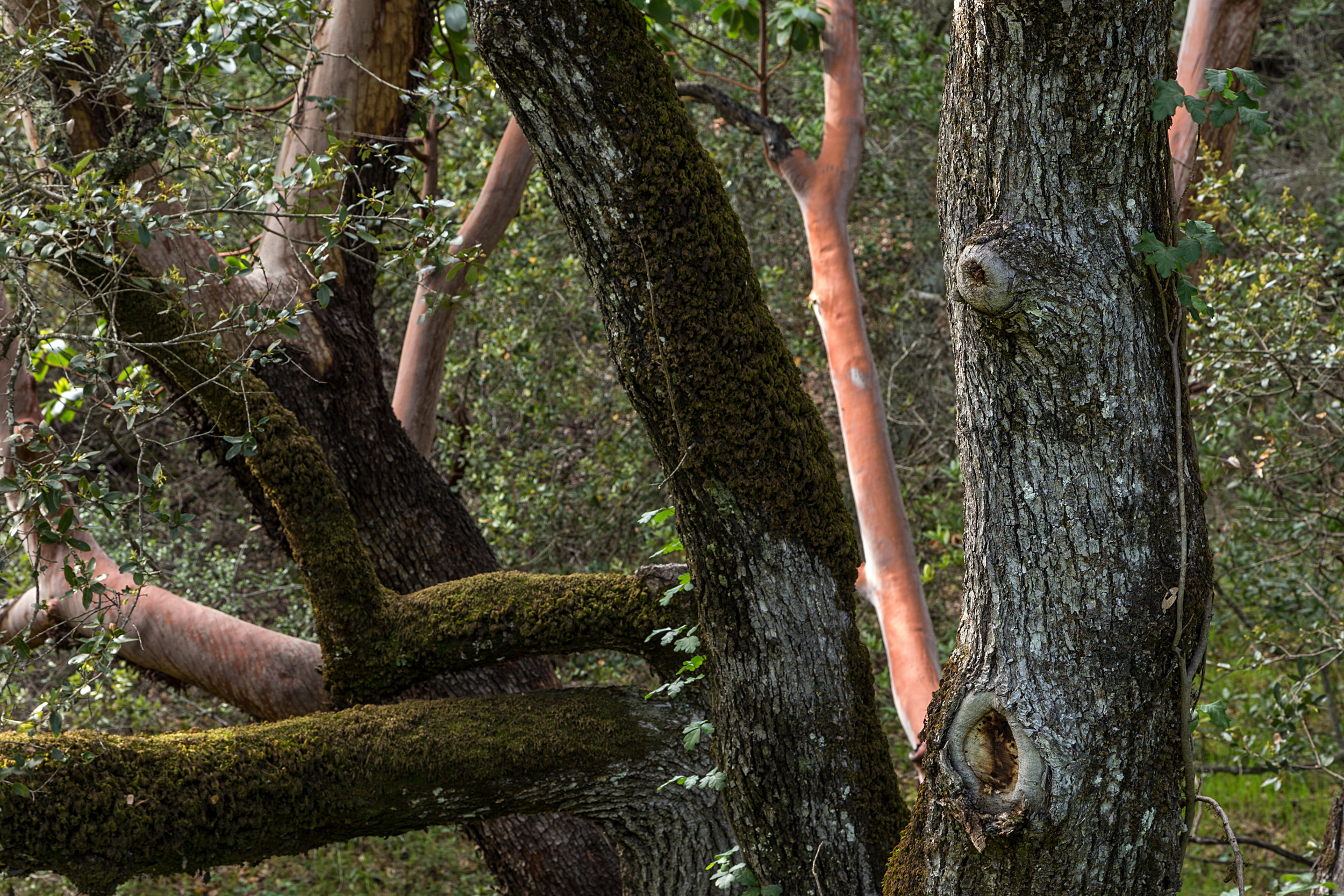 Madrone Canyon Trail-19.jpg