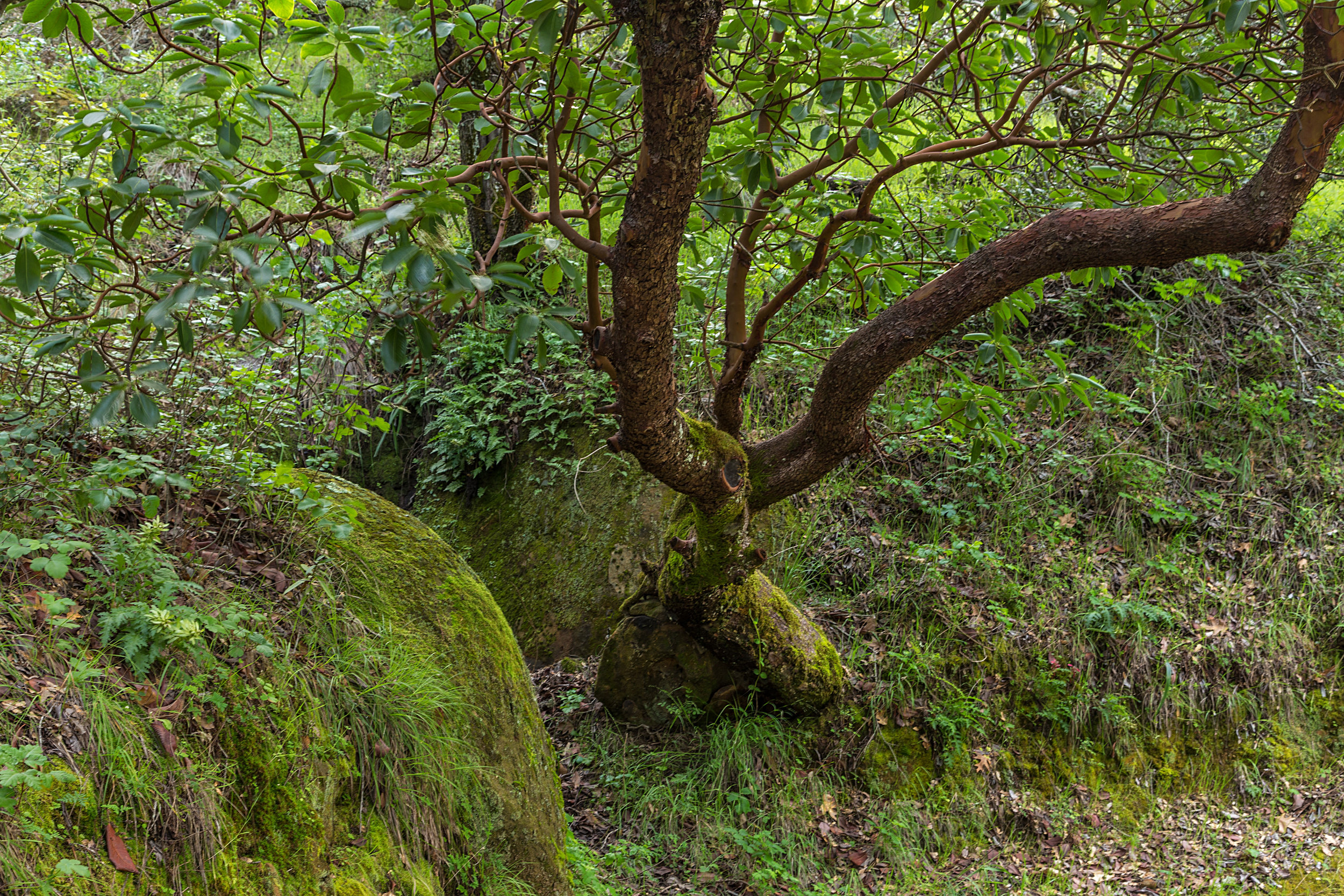Madrone Canyon Trail-21.jpg